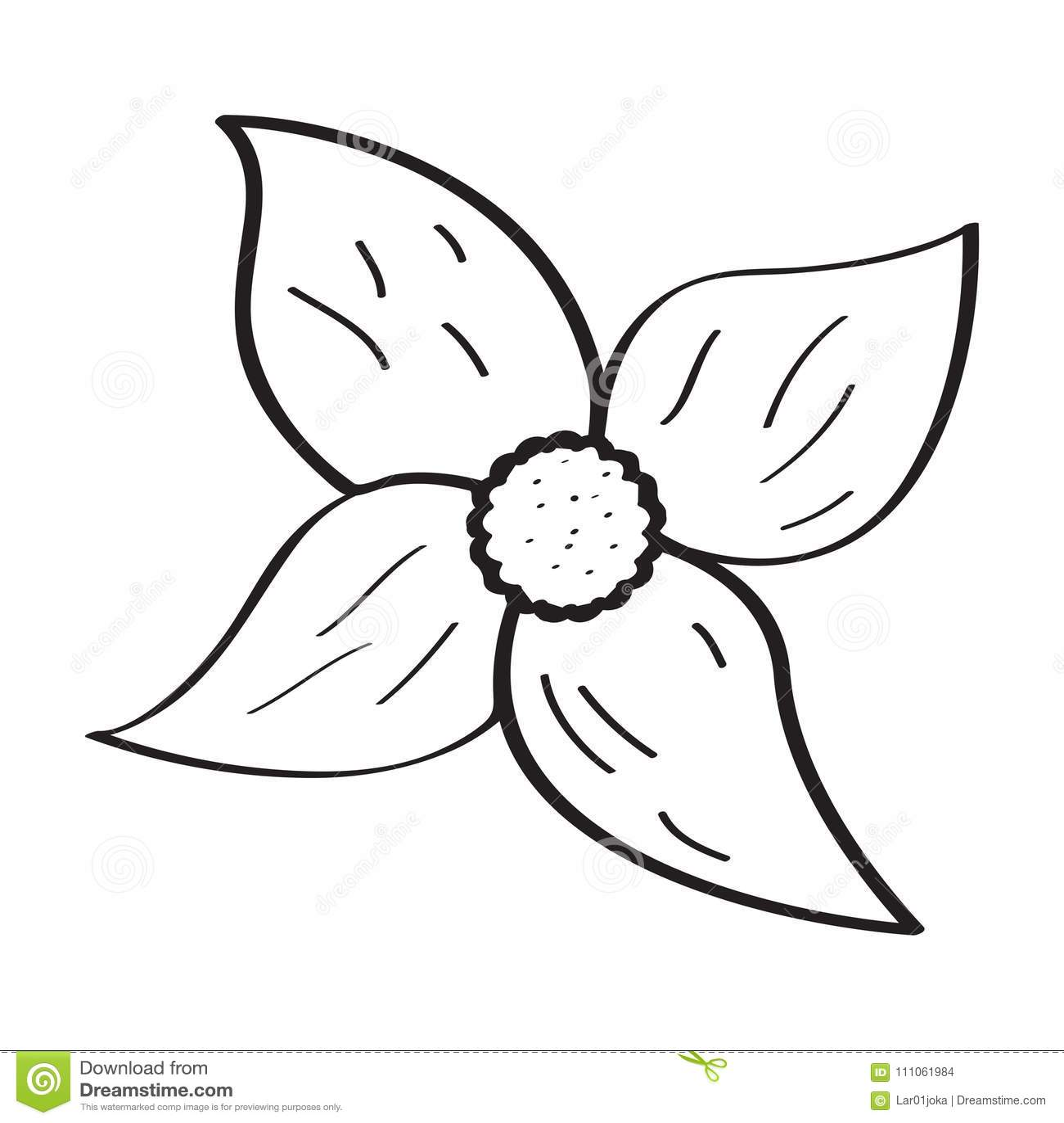 Desenho De Uma Flor Ilustracao Do Vetor Ilustracao De Fundo