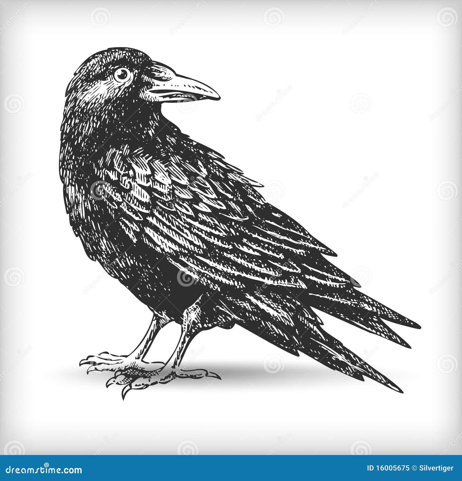 Desenho do corvo