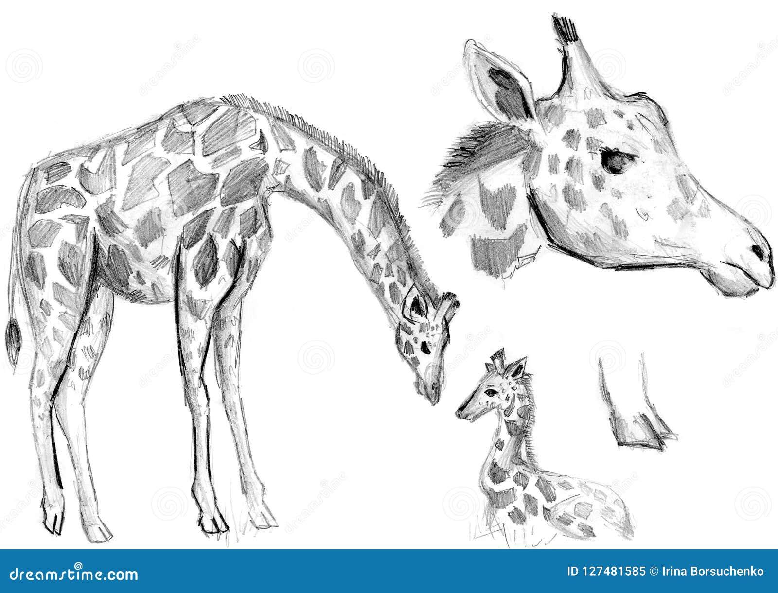 Desenhos De Um Girafa Em Um Fundo Branco Um Lápis Simples