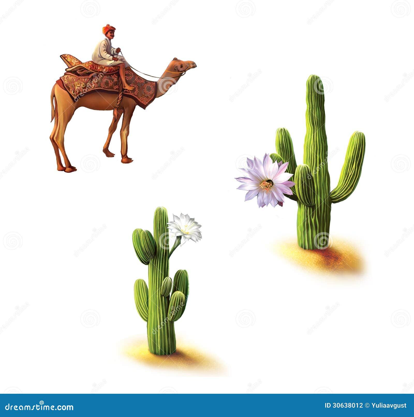 Desert, Bedouin on camel, saguaro cactus with flowers, Opuntia cactus ...Western Desert Clipart