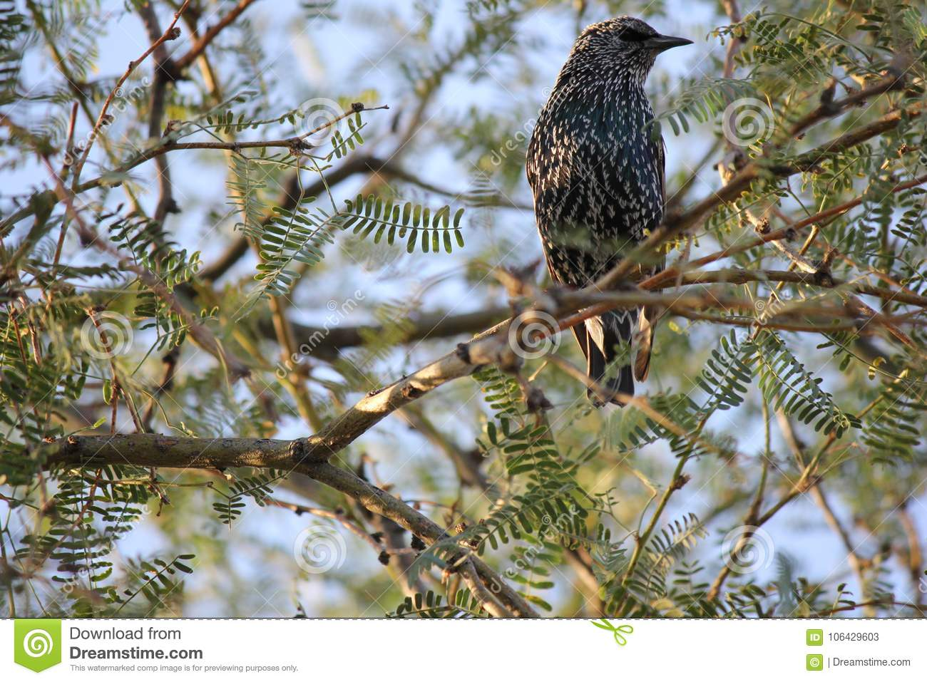 Desert birds tend to be much more abundant where the vegetation is lusher and thus offers more insects, fruit and seeds as food.