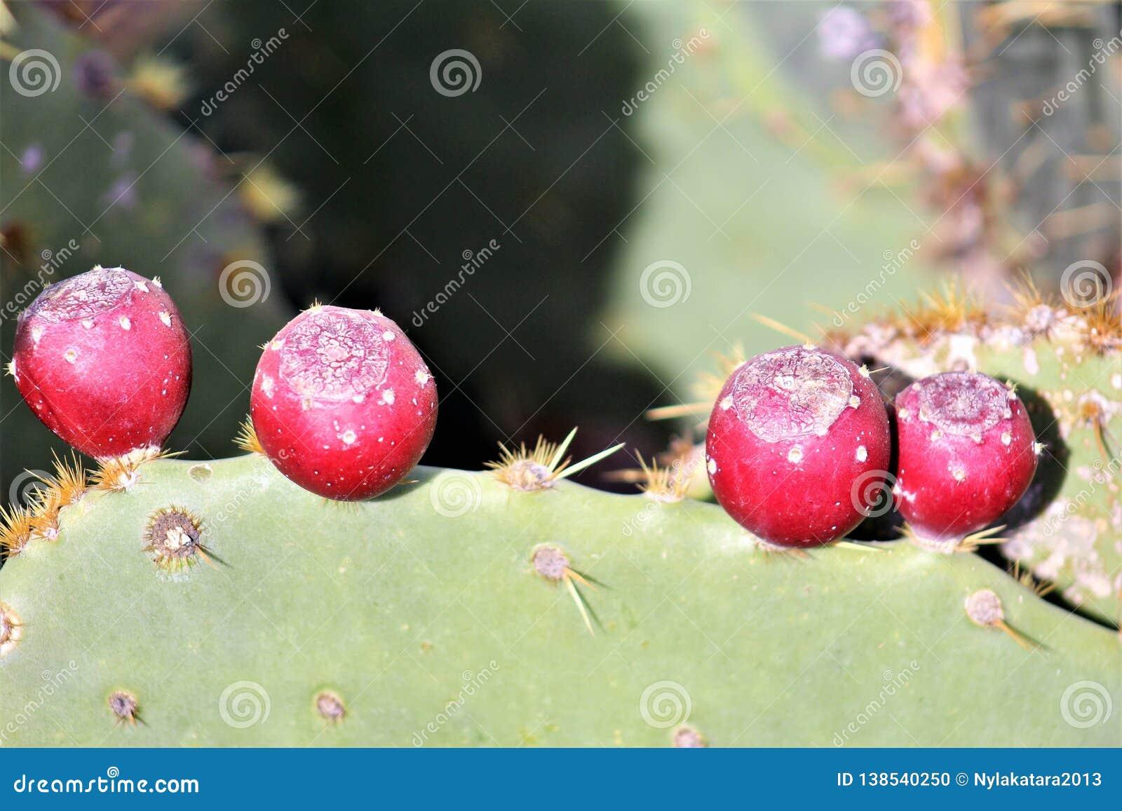 Desert Botanical Garden Phoenix, Arizona, United States