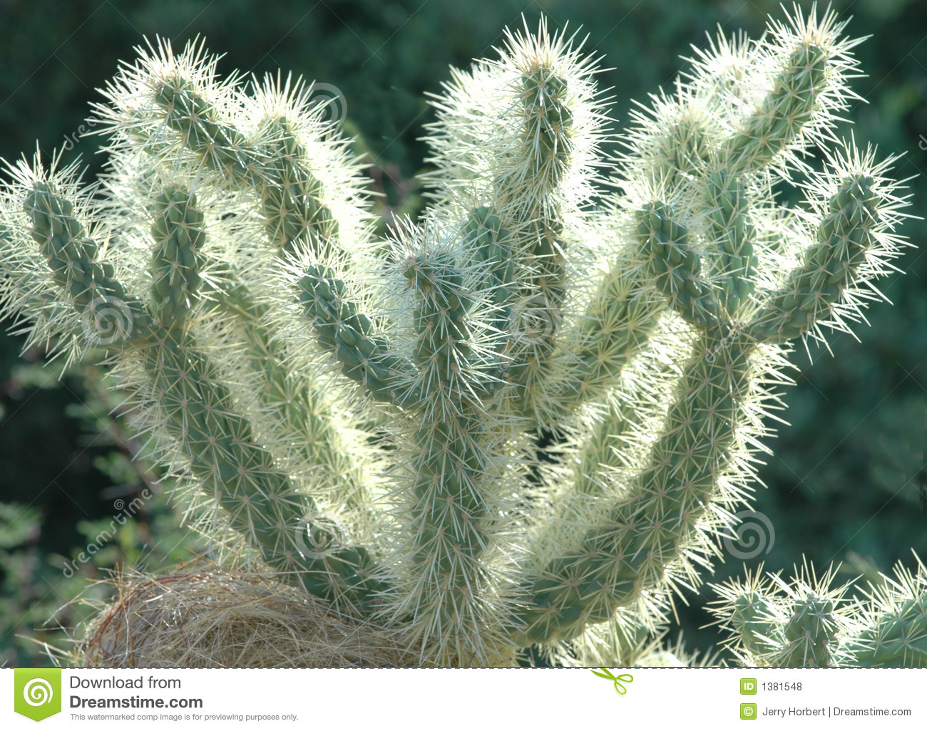 Desert Cactus Royalty Free Stock Photos - Image: 1381548