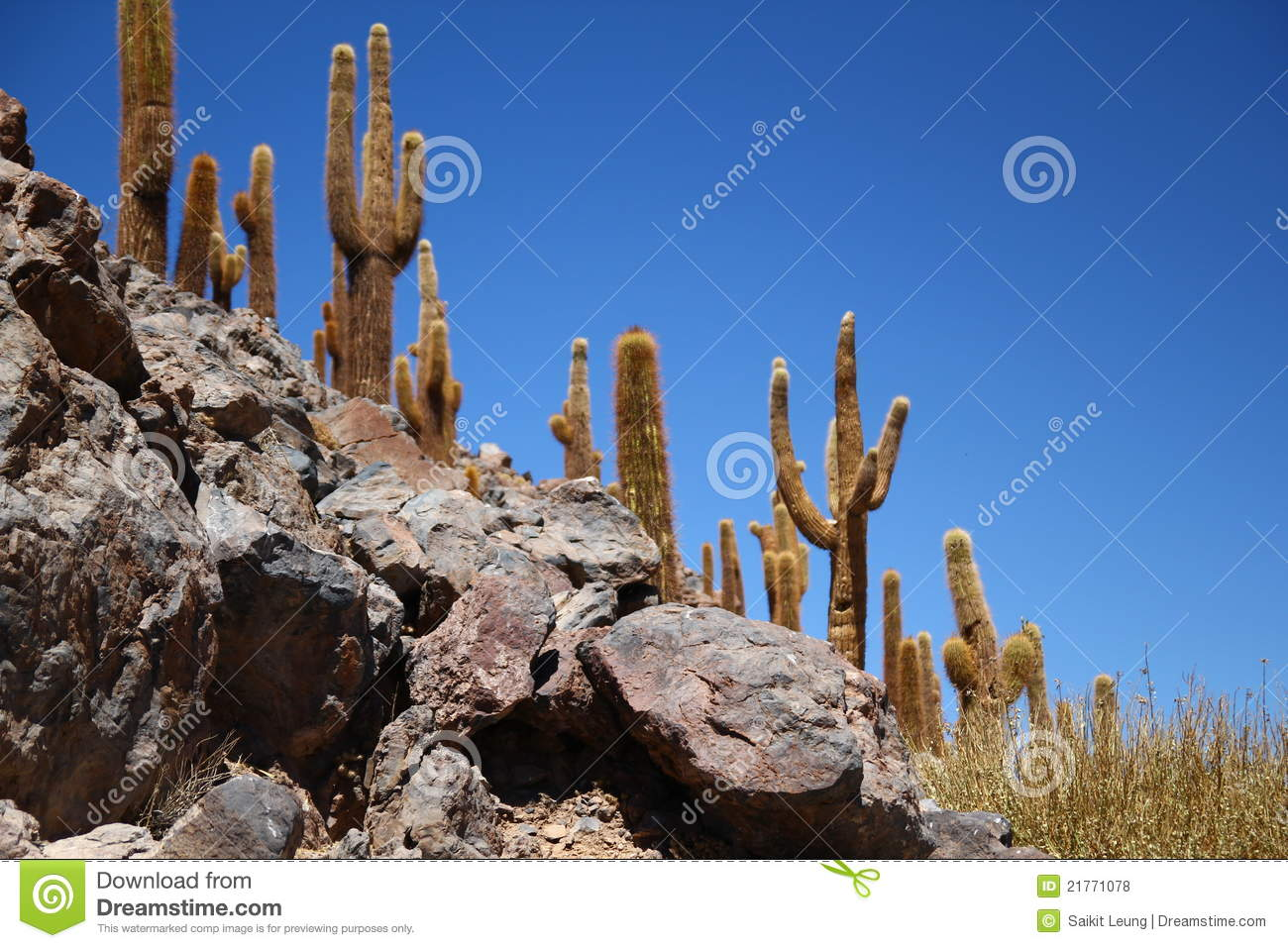 Desert Cactus Royalty Free Stock Photos - Image: 21771078 HD Wide Wallpaper for Widescreen