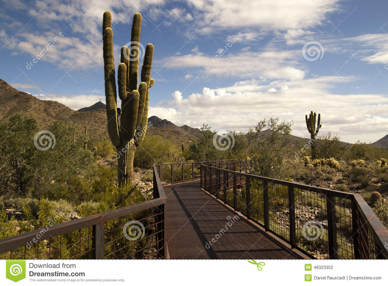 Desert cactus and mountains