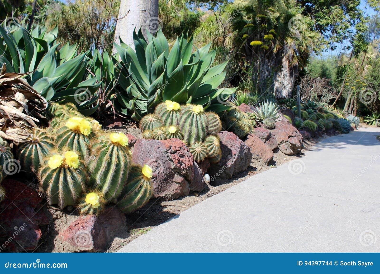 Desert Cactus Stock Photo Image Of Desert Flora Gardens 94397744