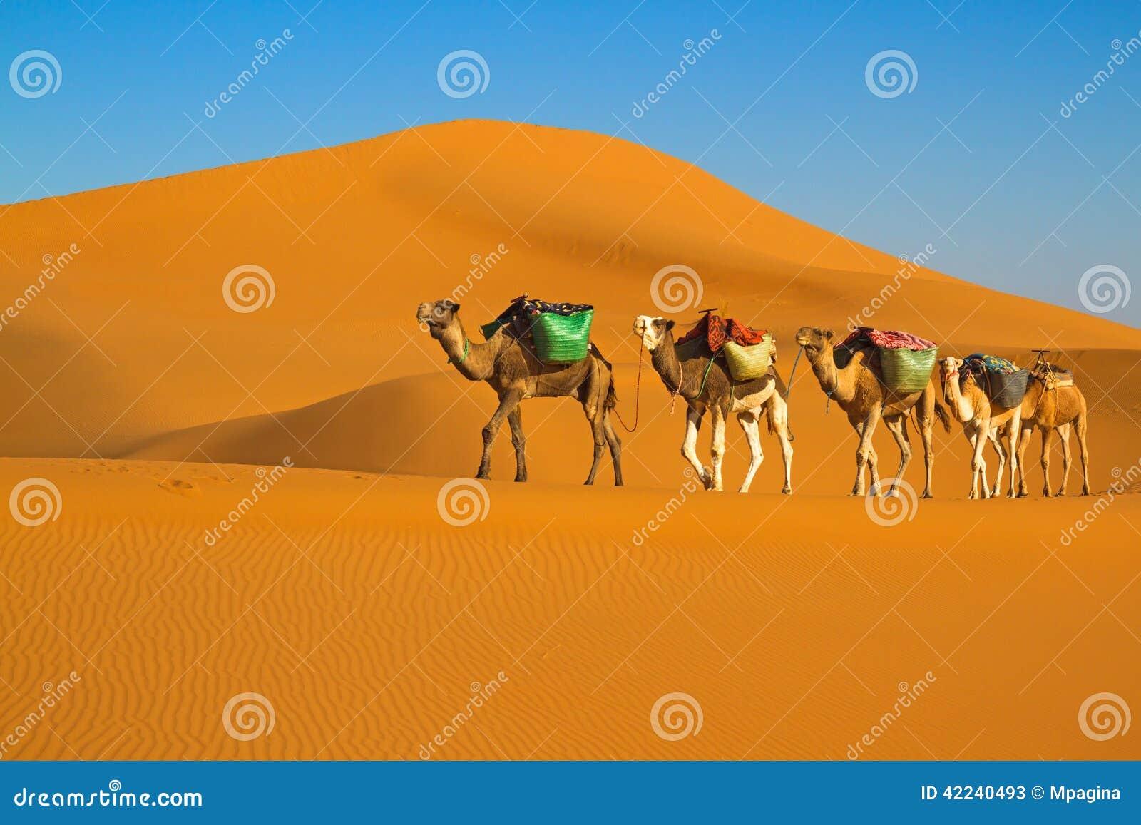 Desert Caravan Stock Photo - Image: 42240493