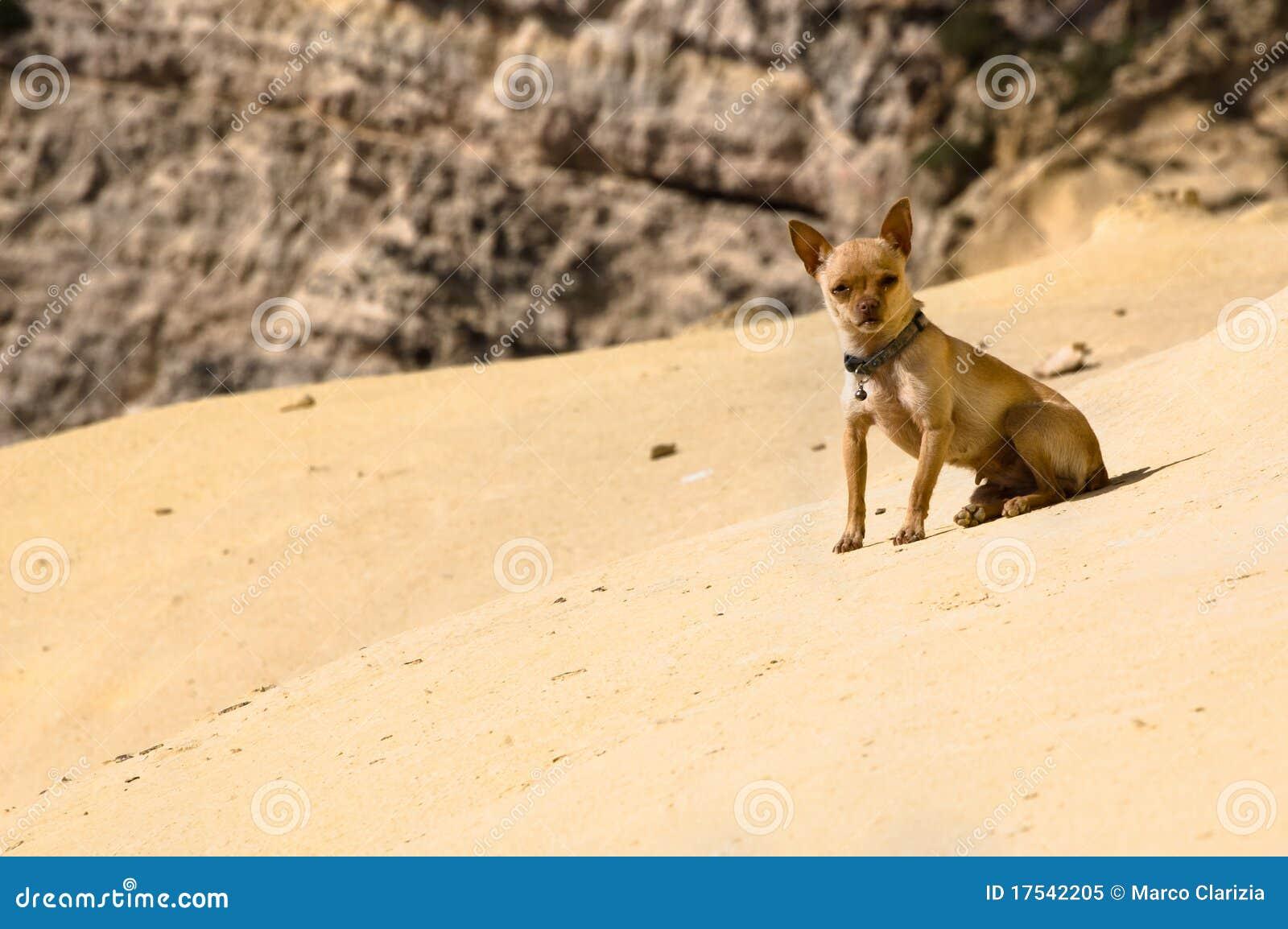 desert chihuahua royalty free stock photo image 17542205 free vector glass buttons free vector glass buttons
