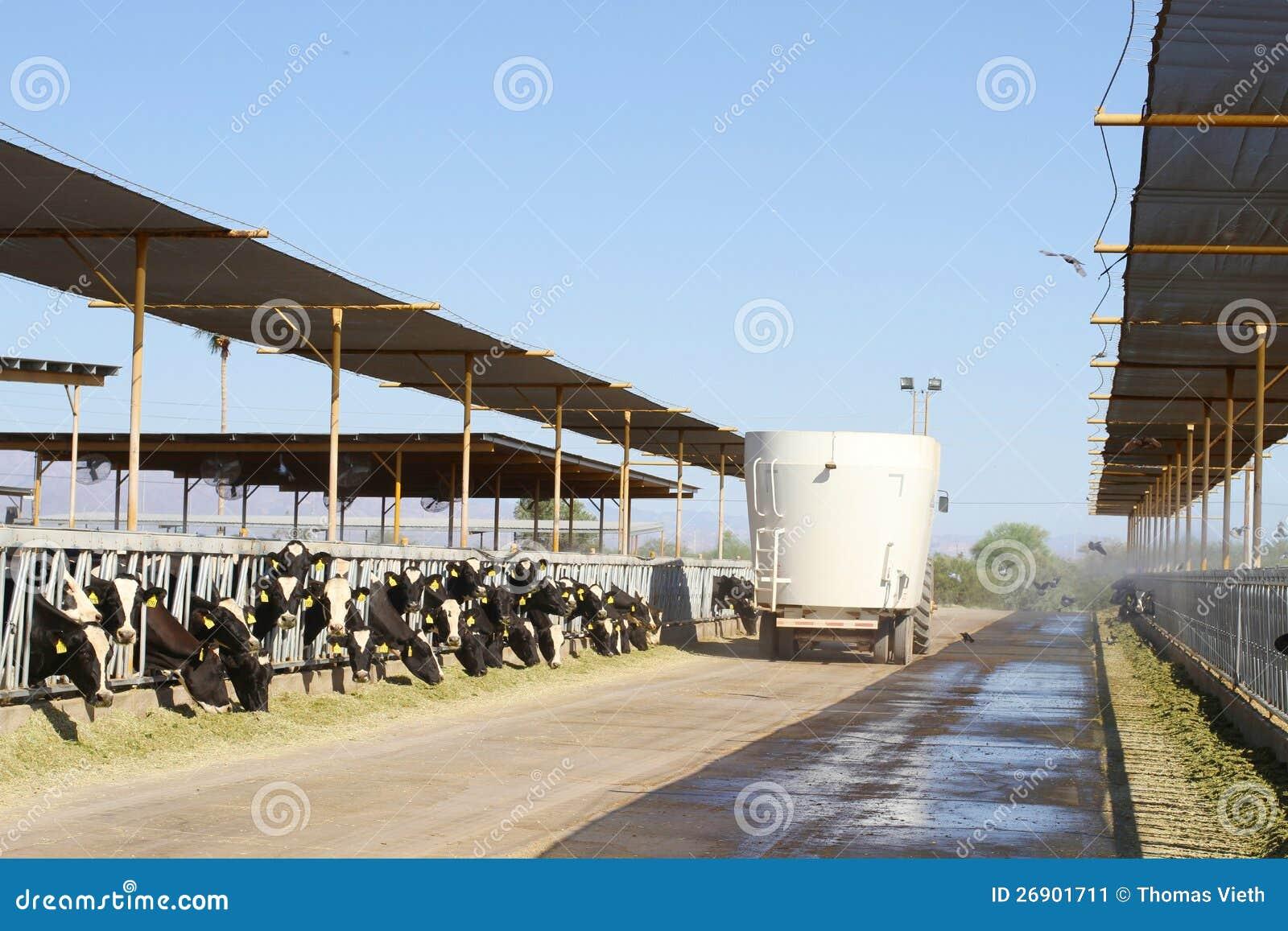 Usa Az Desert Dairy Farm Fodder Distribution Editorial