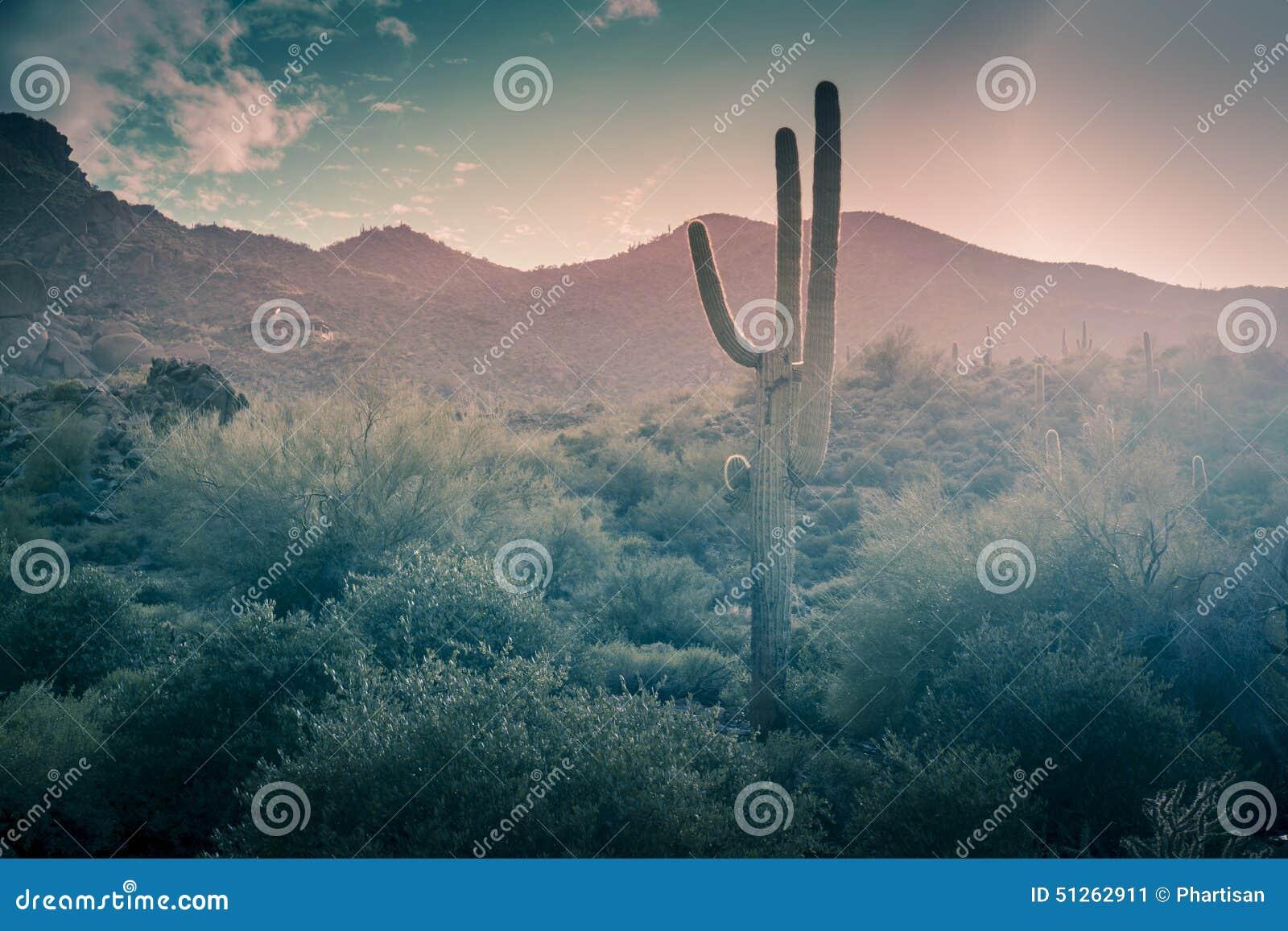 Desert landscape rain Phoenix, Arizona,USA