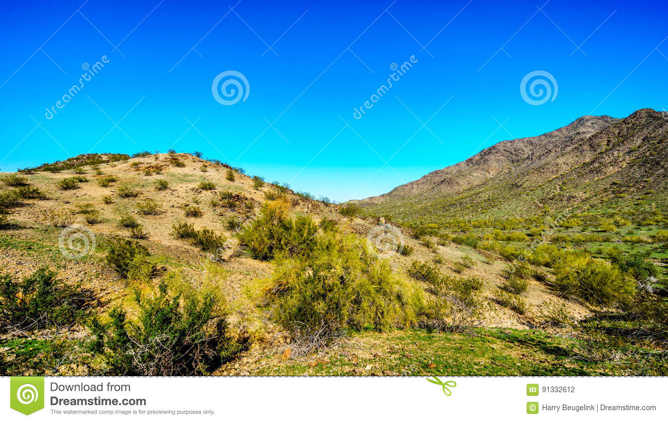 Desert landscape with Saguaro Cacti along the National Trail near the San Juan Trail Head in the mountains of South Mountain Park