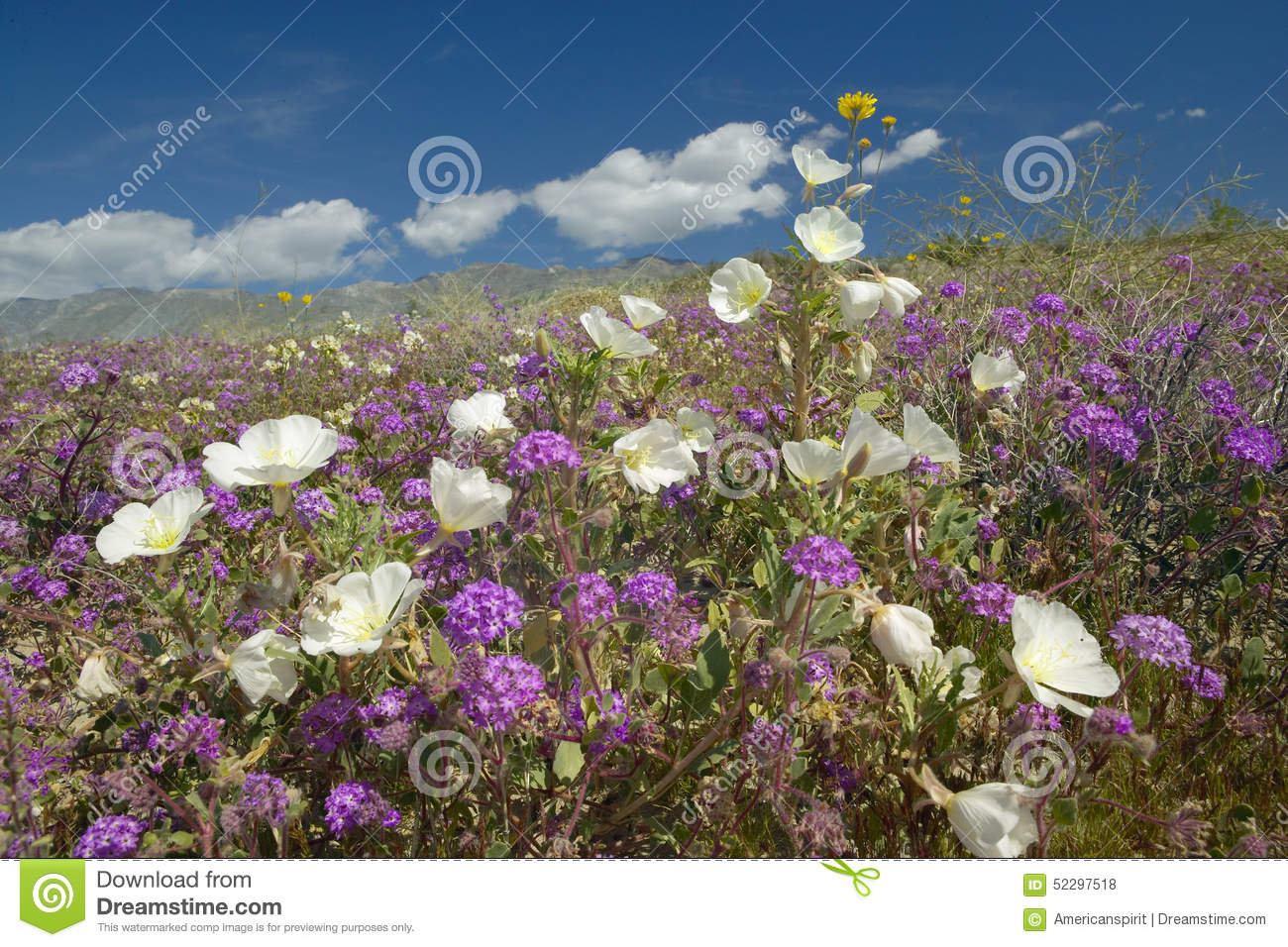 desert lilies and white flowers blossoming with white puffy clouds