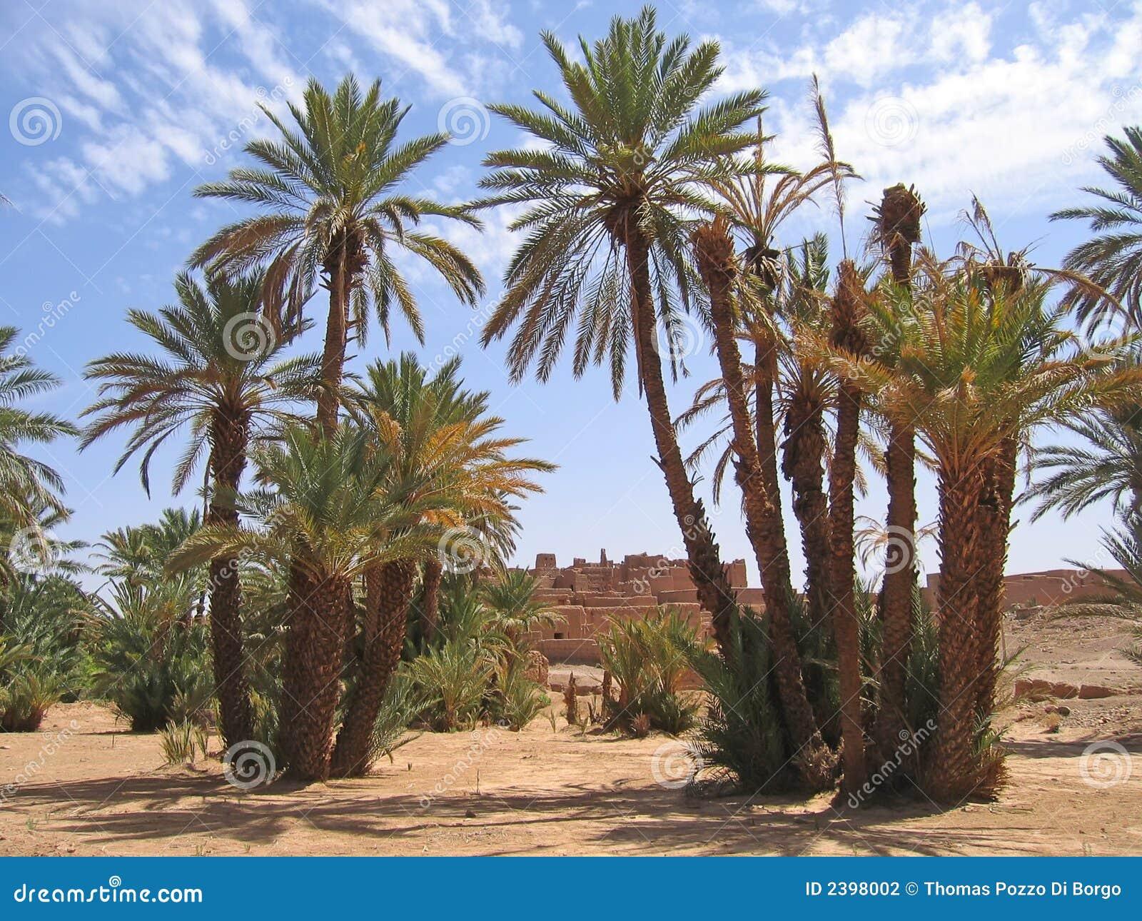 Palm Tree Desert Oasis Island