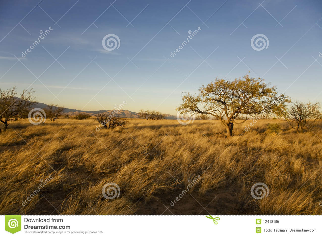 Desert plain royalty free stock photo image 12418195 for Abstract salon tucson