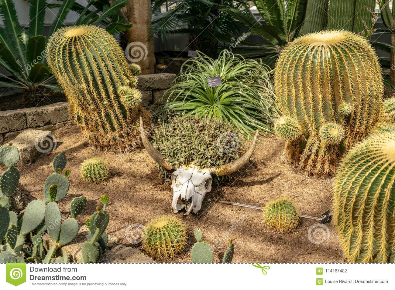 Desert Plants Management At Montreal Botanical Garden Stock Photo ...