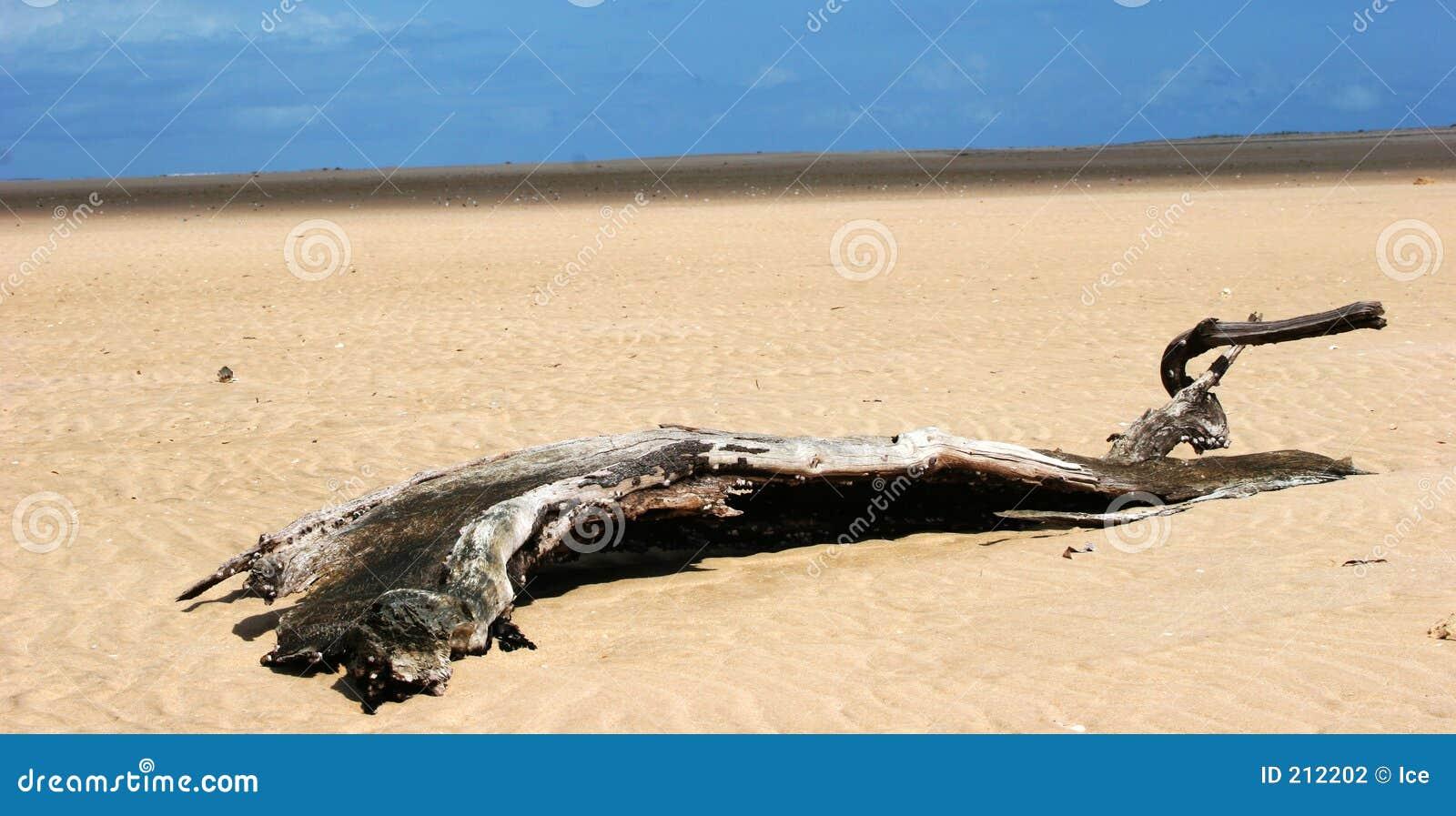 Deserterad liggande treestam för strand öken