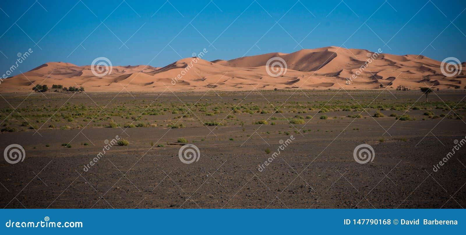 Deserto de Sahara no por do sol
