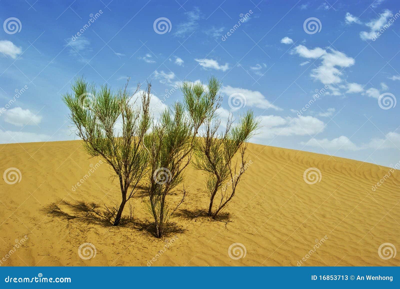 Deserto de Taklimakan