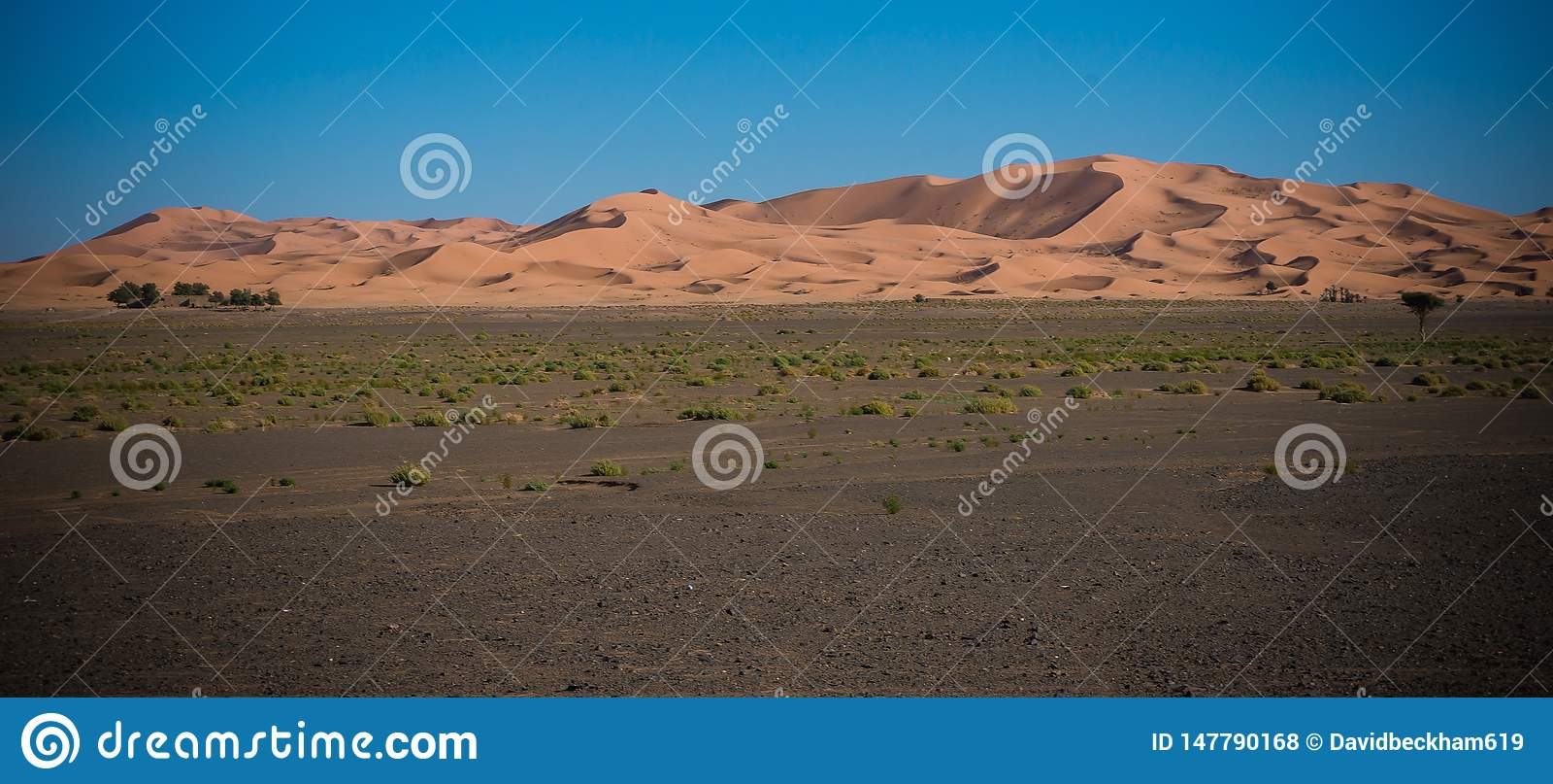 Deserto del Sahara nel tramonto