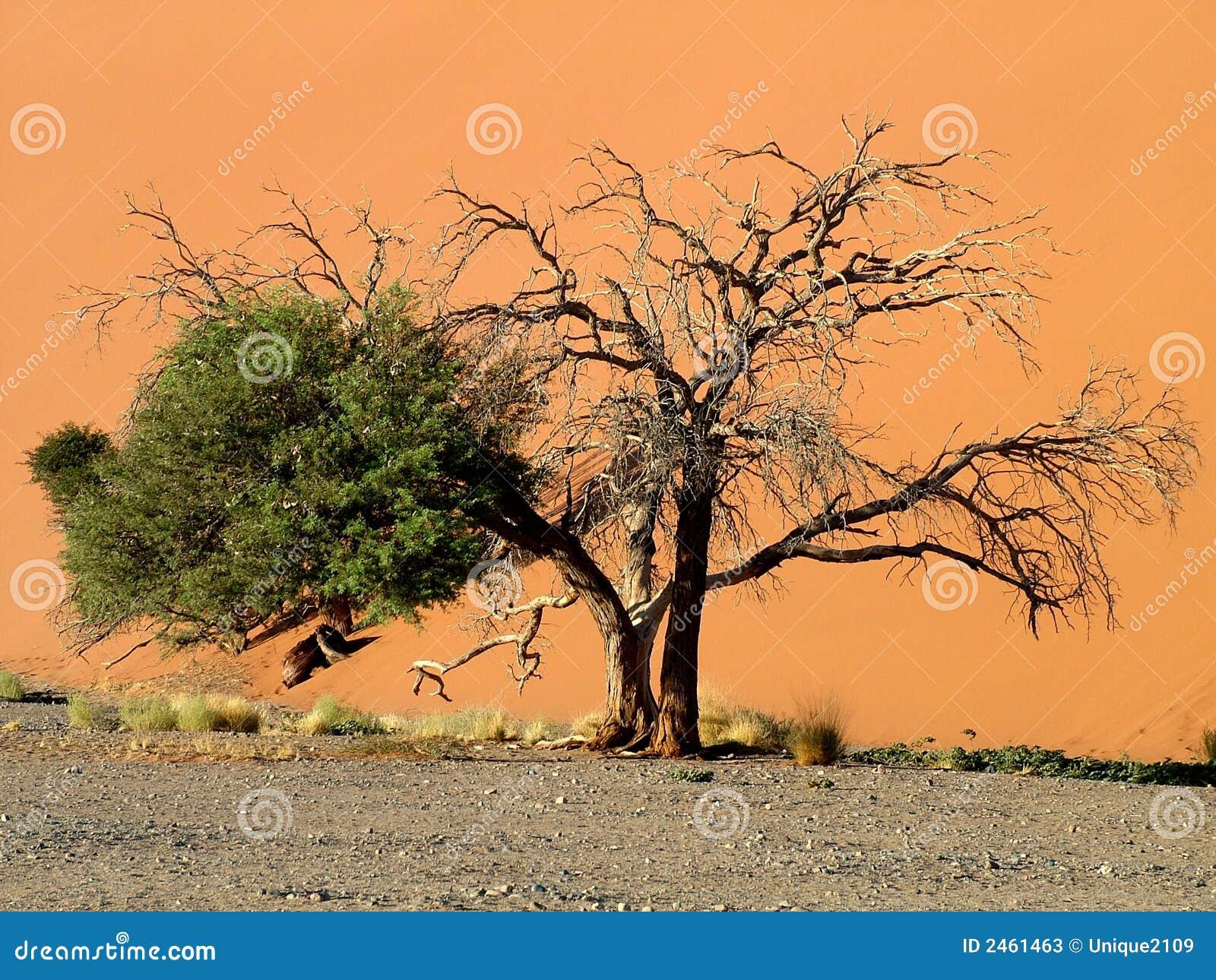 Deserto namibiano