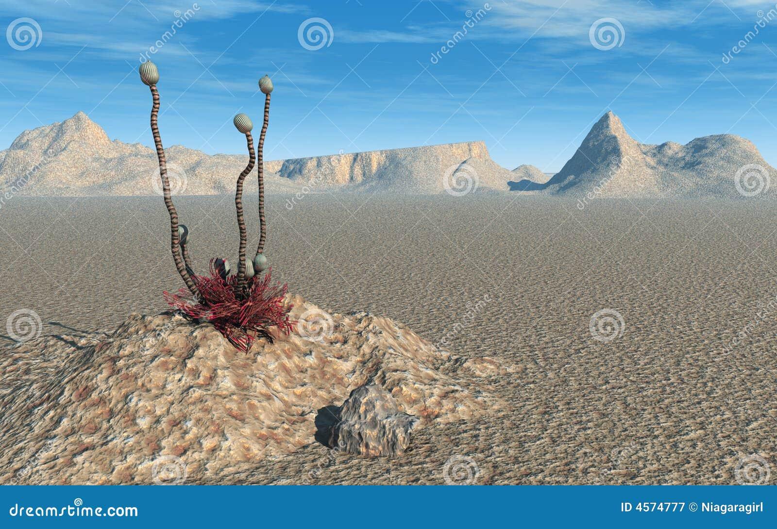 Deserto straniero