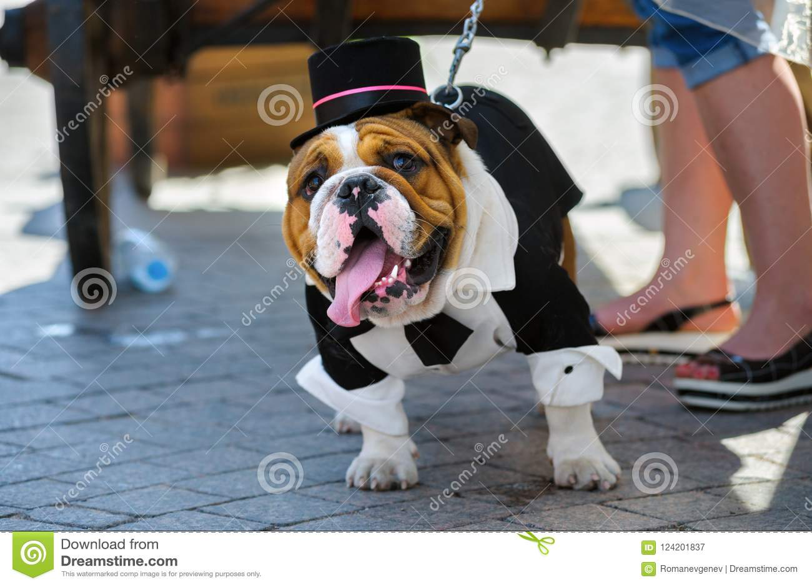 Desfile del dogo