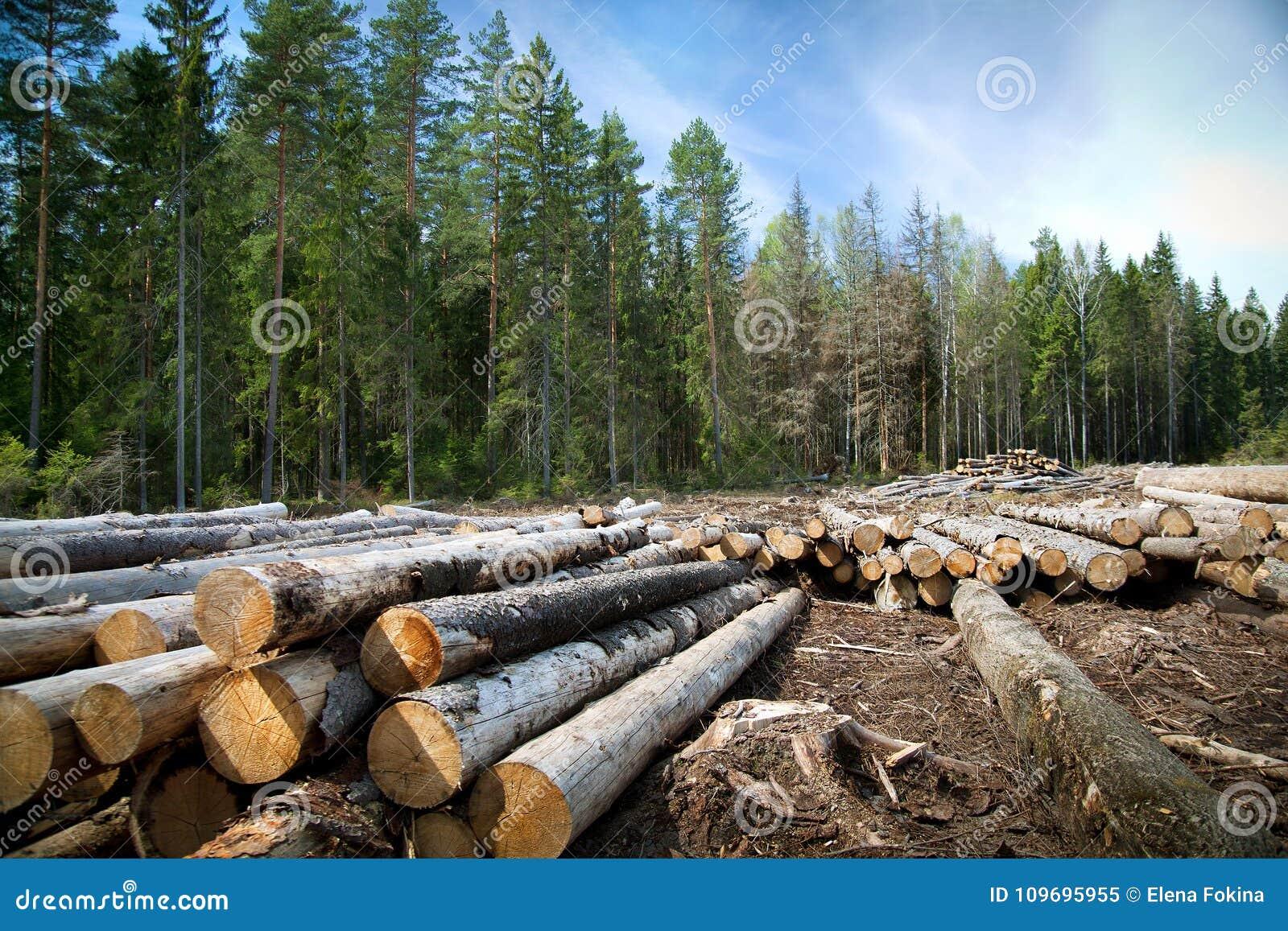 Desflorestamento em áreas rurais Suporte a colheita