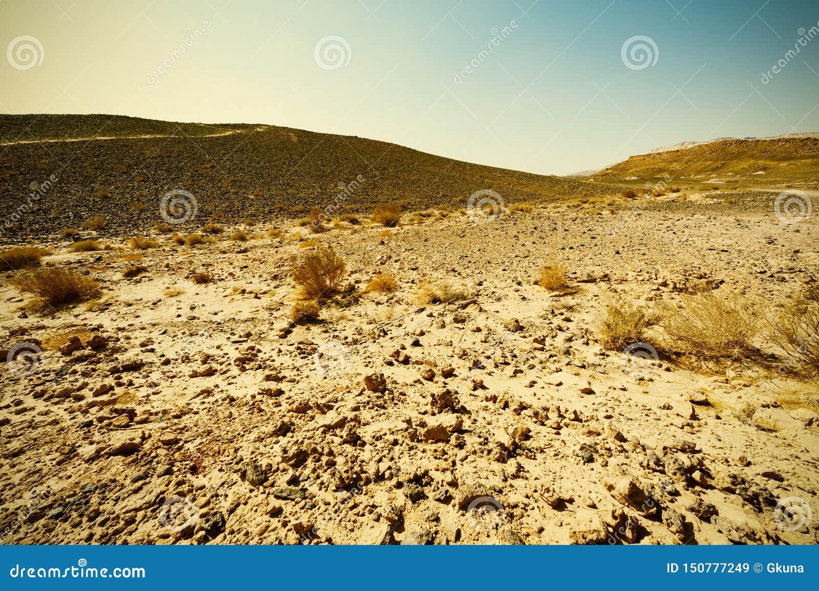 Desierto del estilo del vintage