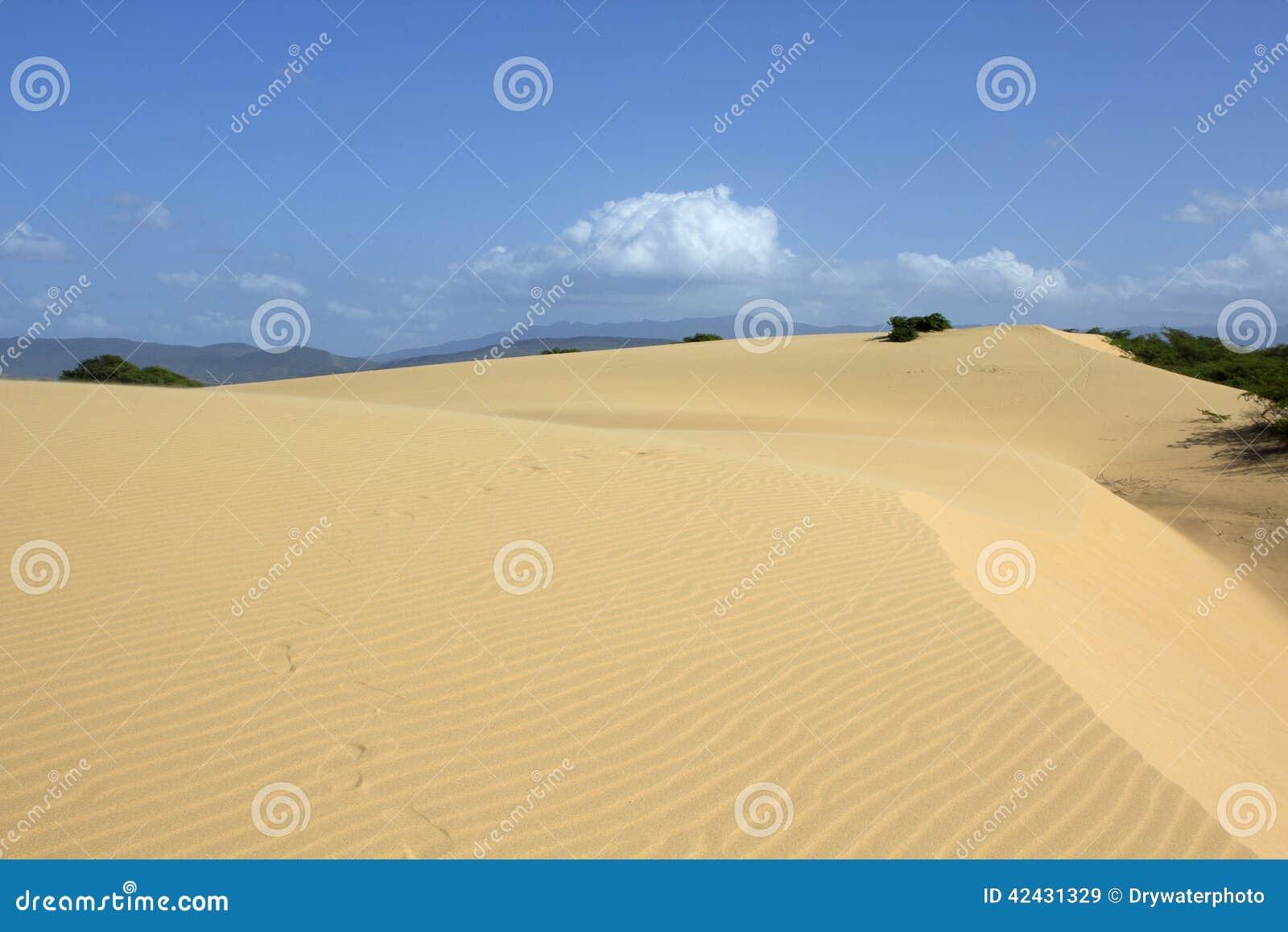 Desierto XI