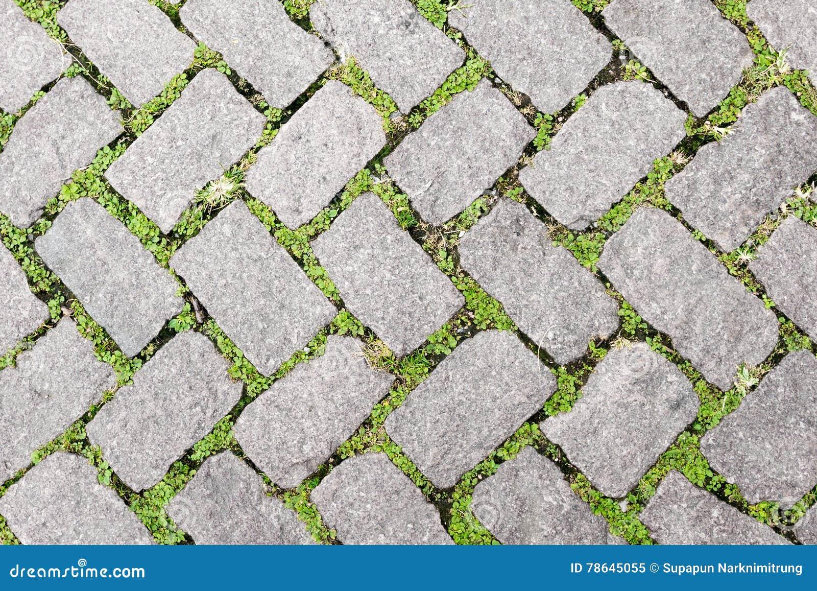 Design för trottoar för textur för grässtengolv