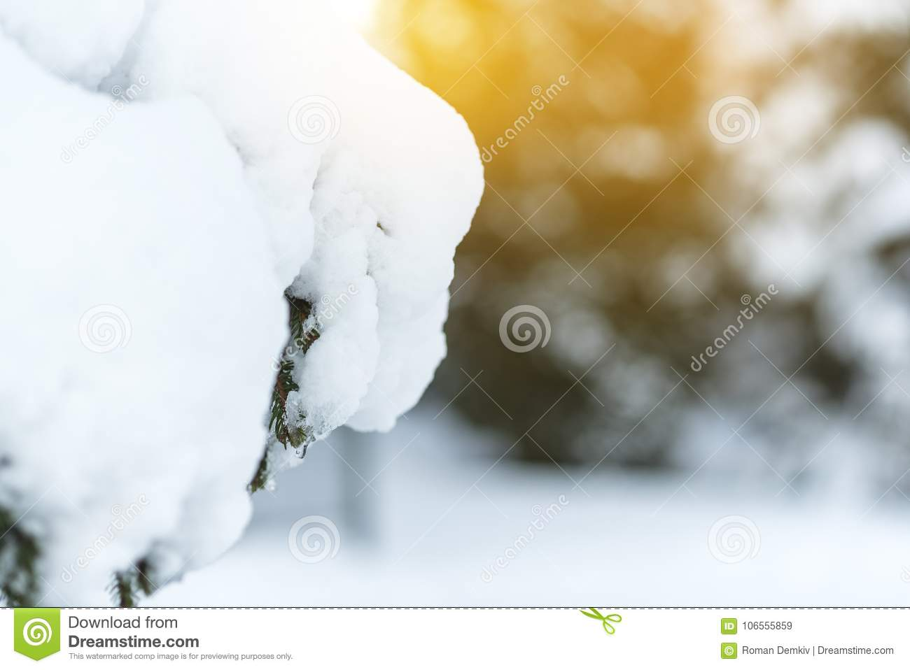 design template for the greeting card spruce is covered with snow