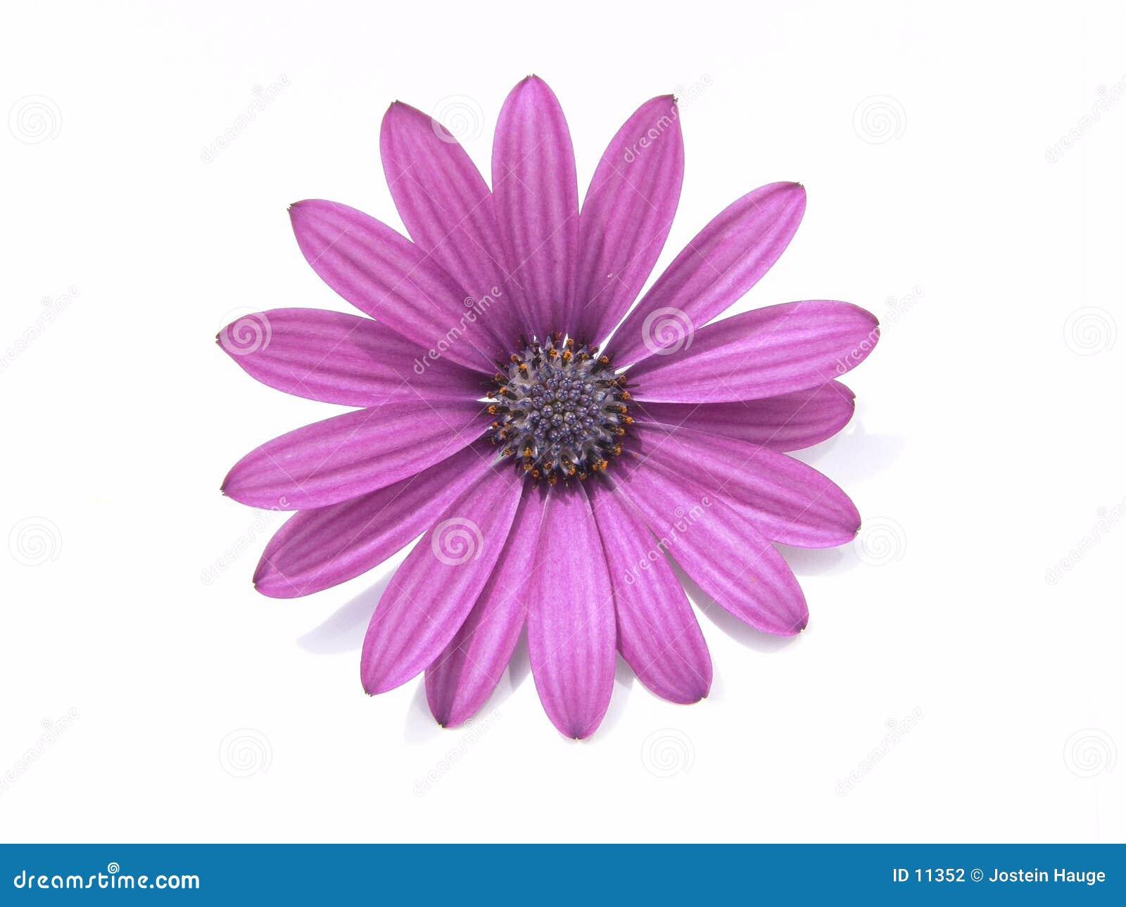 Designelement blommar huvudet