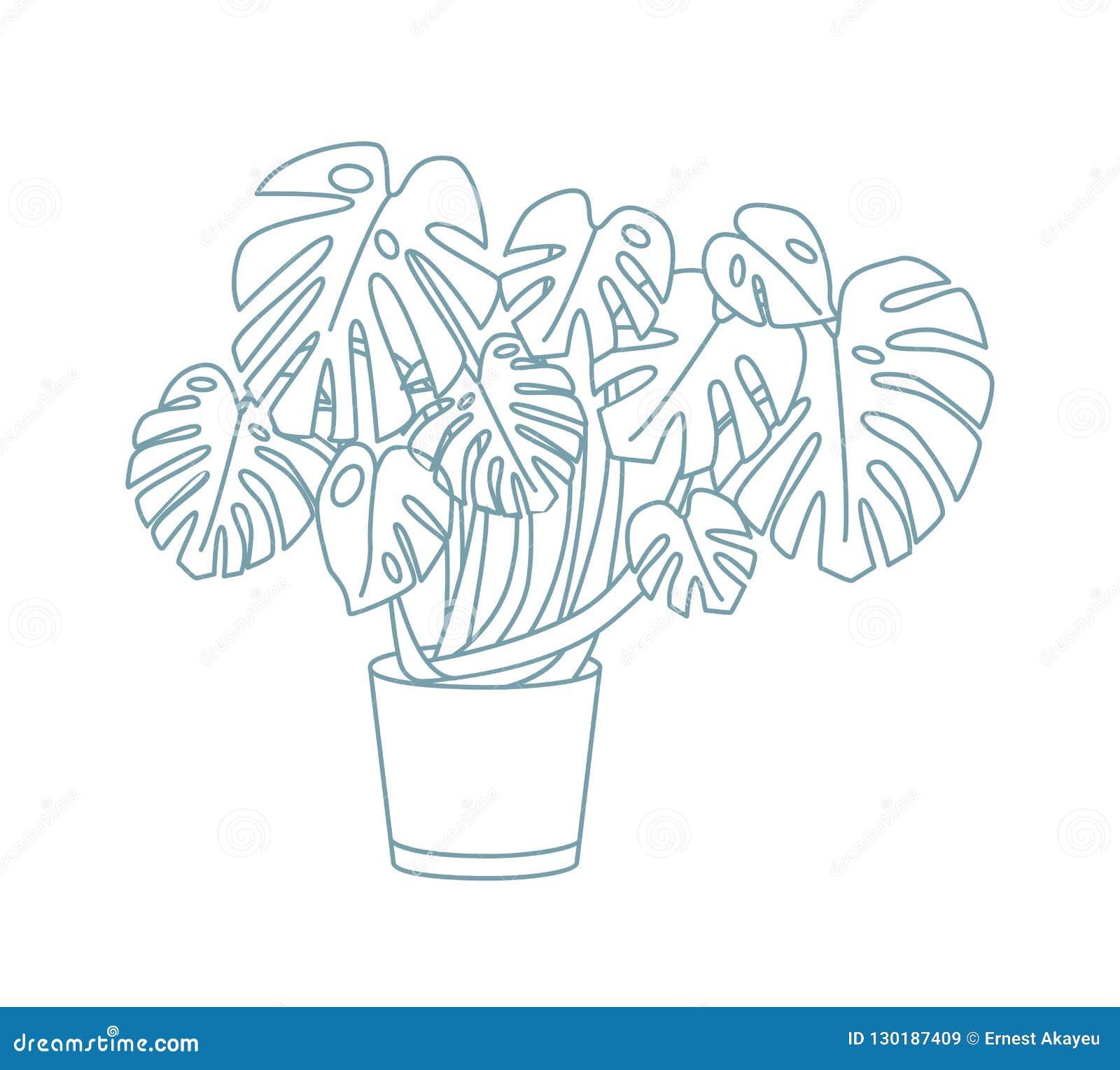 Dessin élégant De Monstera S élevant Dans Le Pot Plante D