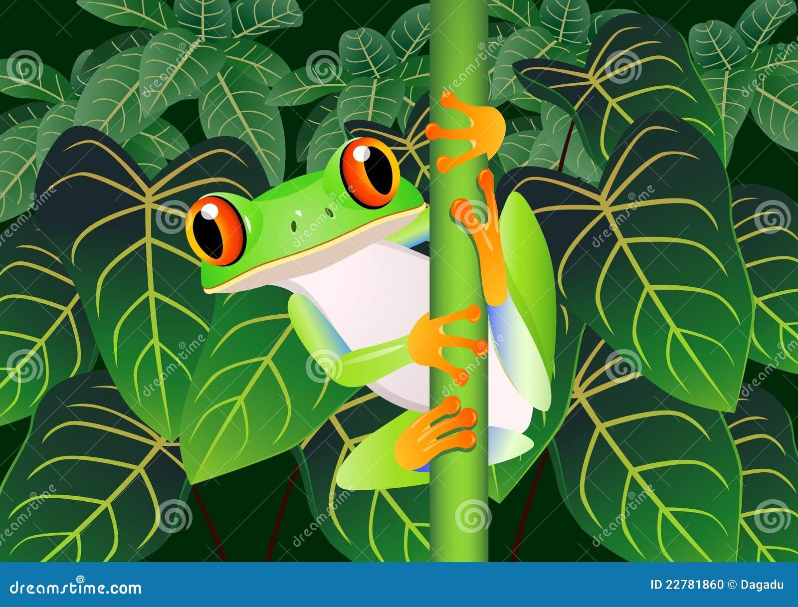 Dessin anim de grenouille - Dessin de grenouille verte ...