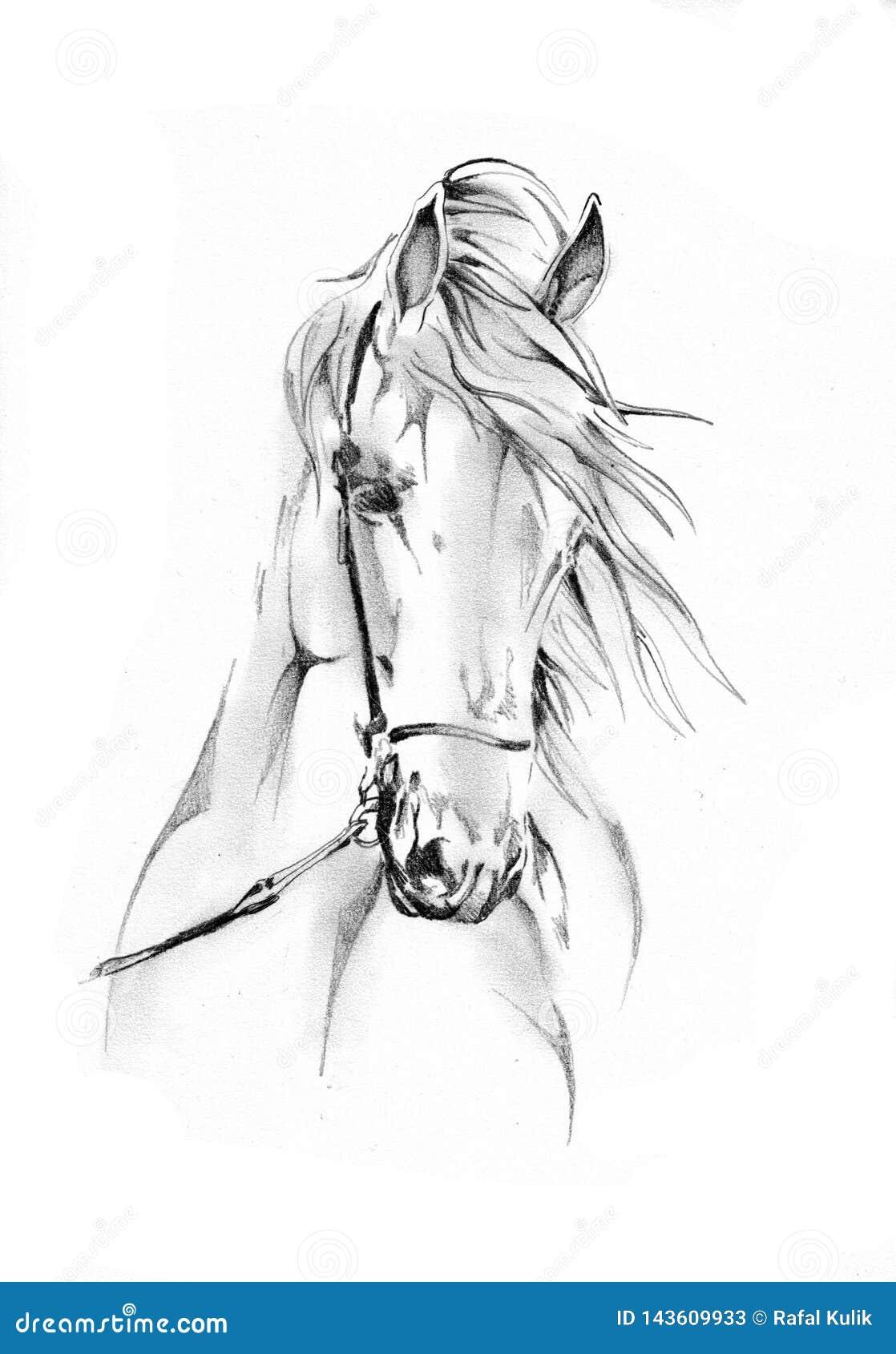 Dessin Au Crayon à Main Levée De Tête De Cheval Illustration
