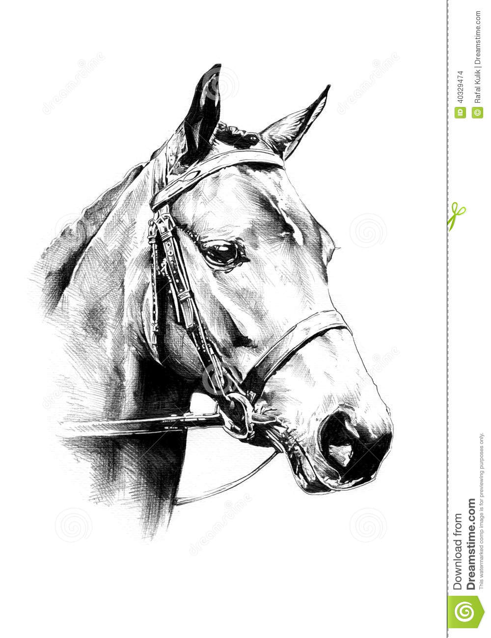Dessin au crayon main lev e de t te de cheval illustration stock illustration du mustang - Dessin de tete de cheval ...