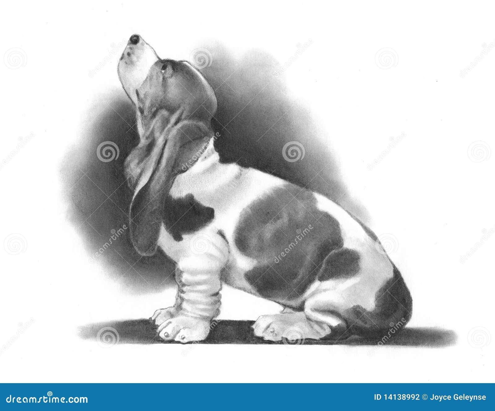 Dessin au crayon d 39 un chien de basset illustration stock - Dessin d un chien ...