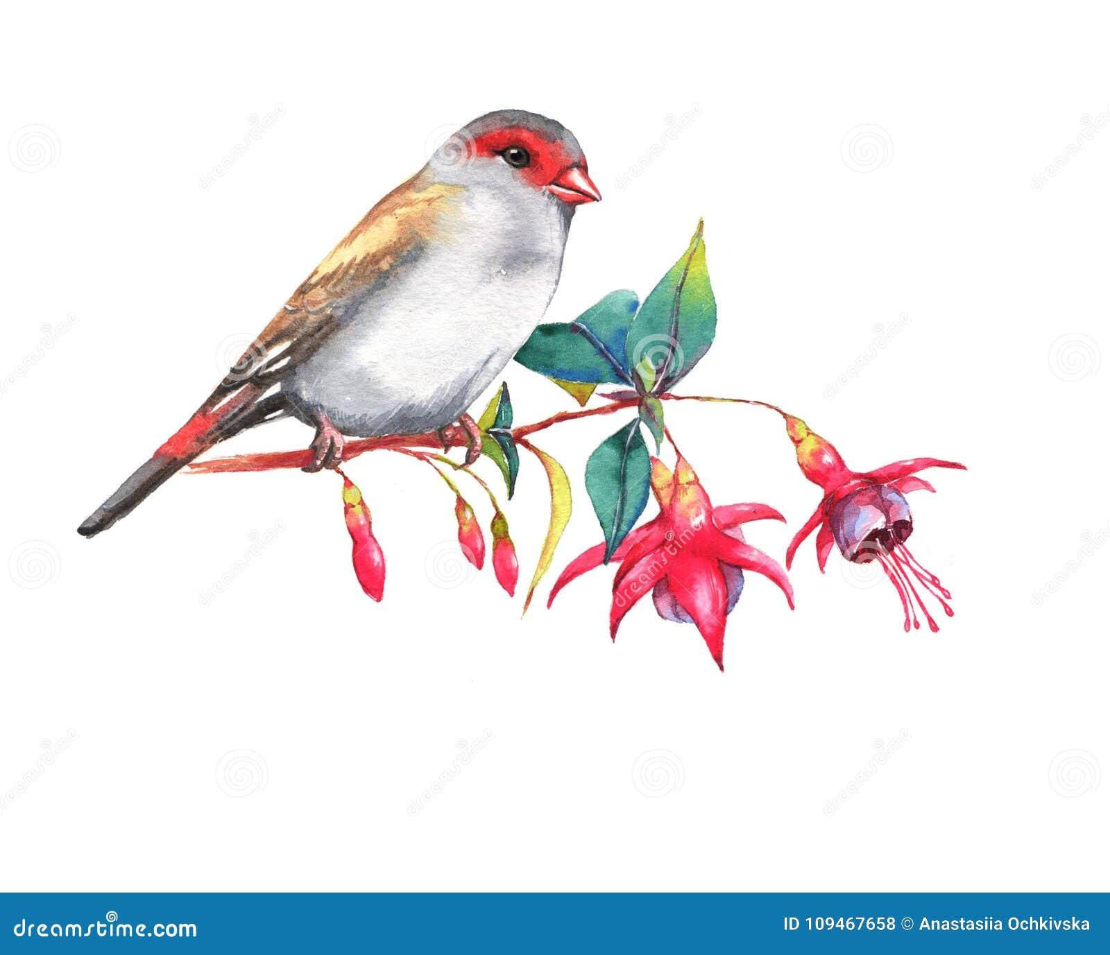 Dessin Colore Sauvage D Oiseau Illustration Stock Illustration Du