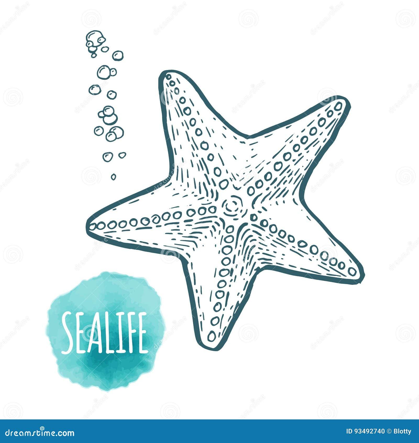 Dessin D Etoiles De Mer Sur Le Fond Blanc Illustration Tiree Par