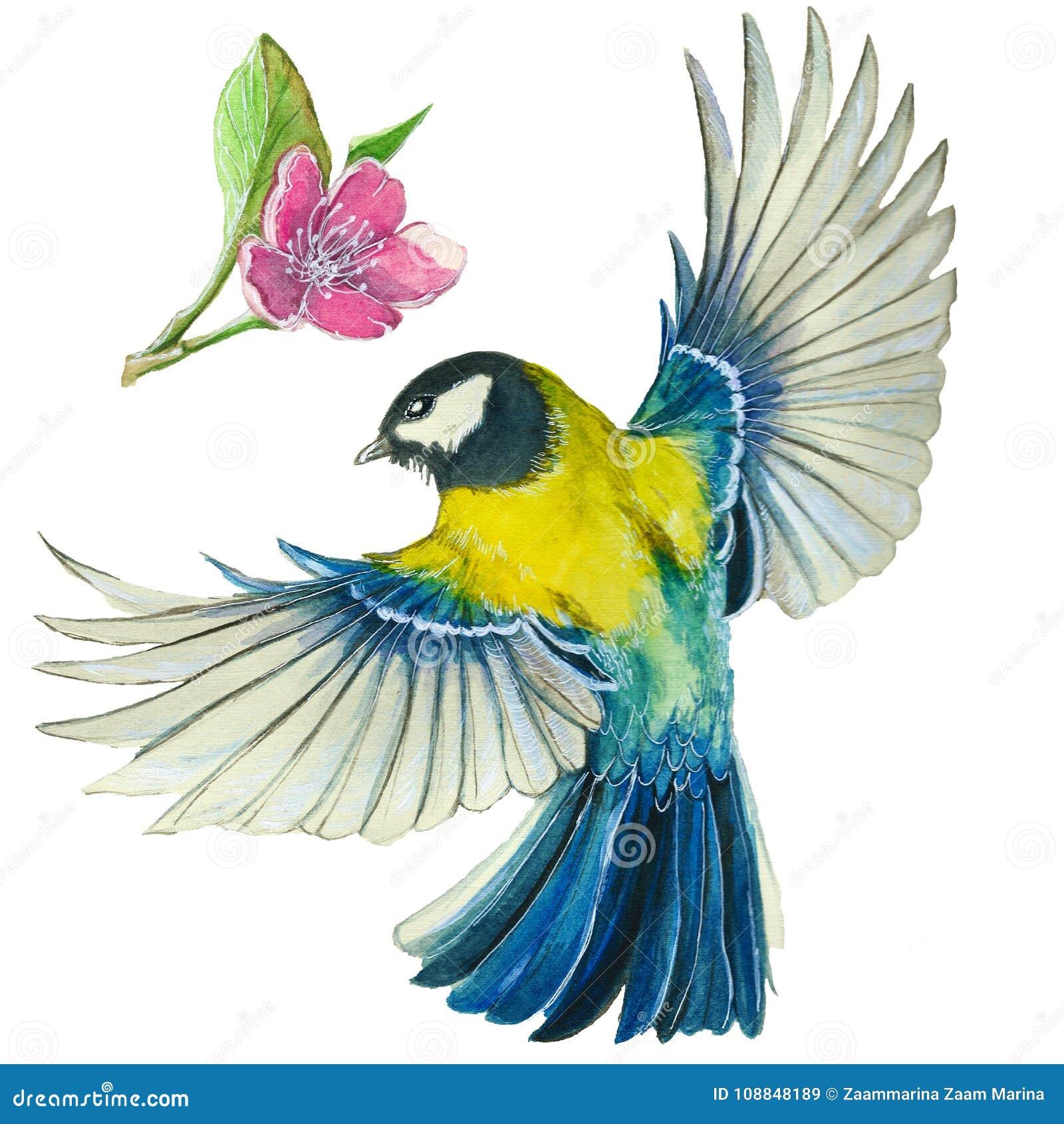 Dessin d 39 aquarelle sur le th me du ressort la chaleur illustration d 39 un oiseau de l 39 ordre de - Oiseau mouche dessin ...