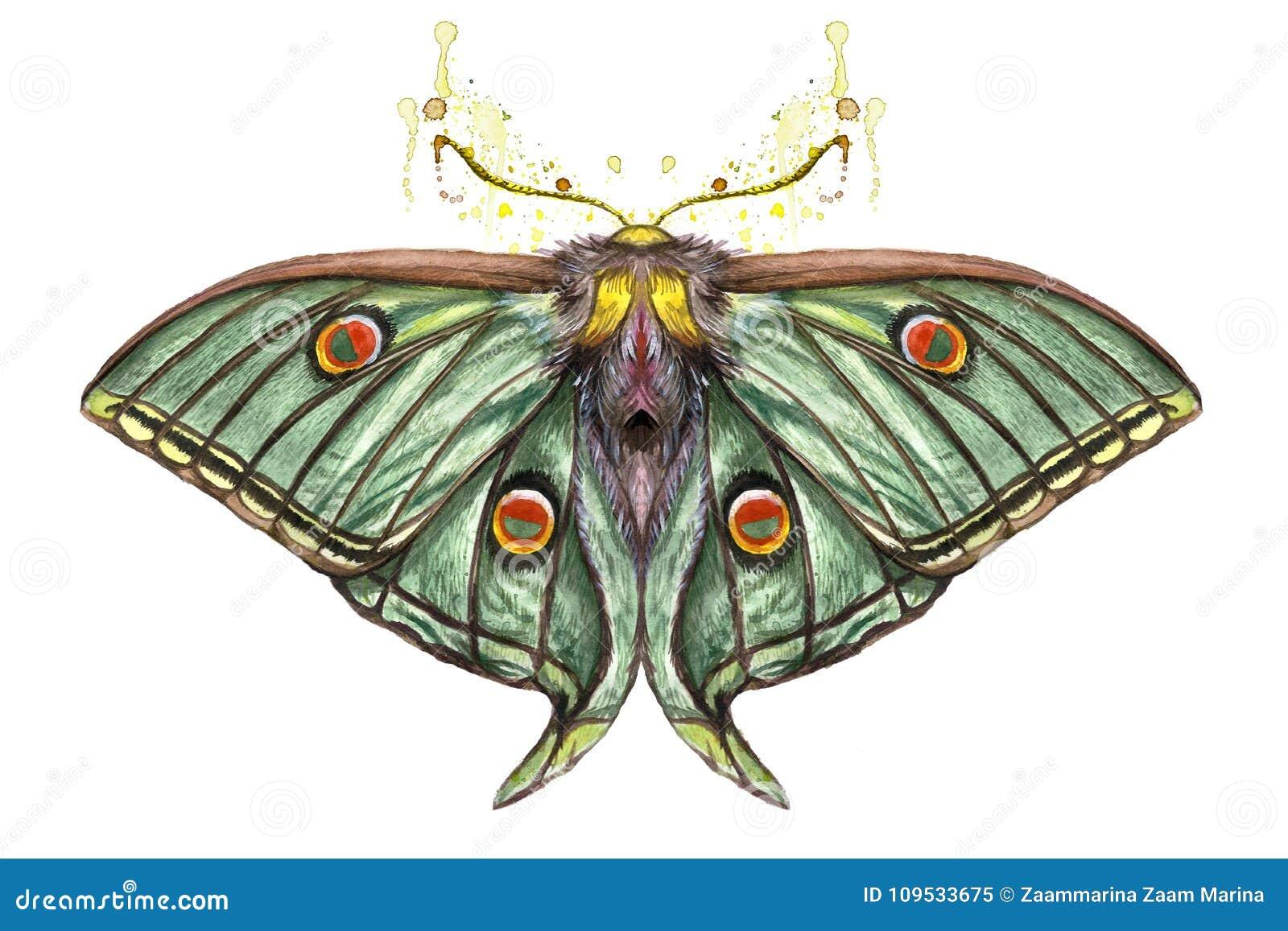 Dessin D Aquarelle D Un Insecte D Un Oeil Artemis Une