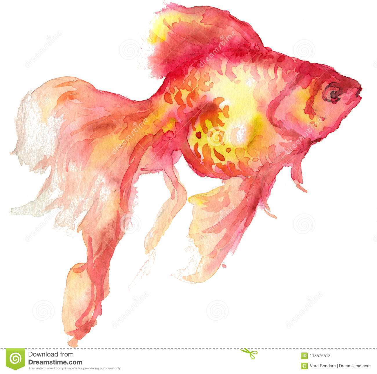 Dessin D Aquarelle D Un Poisson Rouge Illustration Stock
