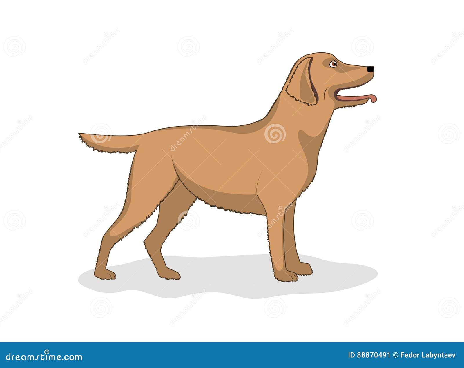 Dessin d 39 un chien de race labrador illustration de - Dessin d un chien ...
