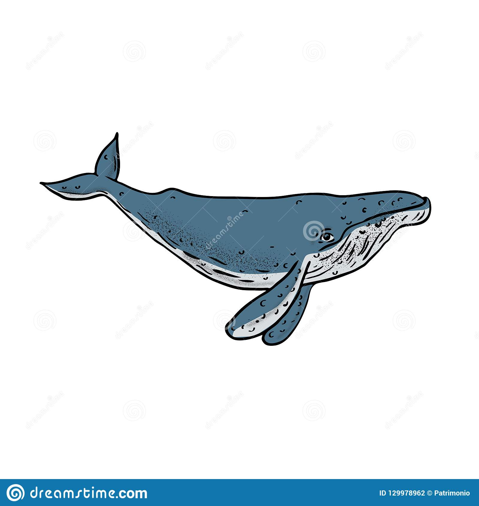 Dessin De Couleur De Baleine De Bosse Illustration De Vecteur