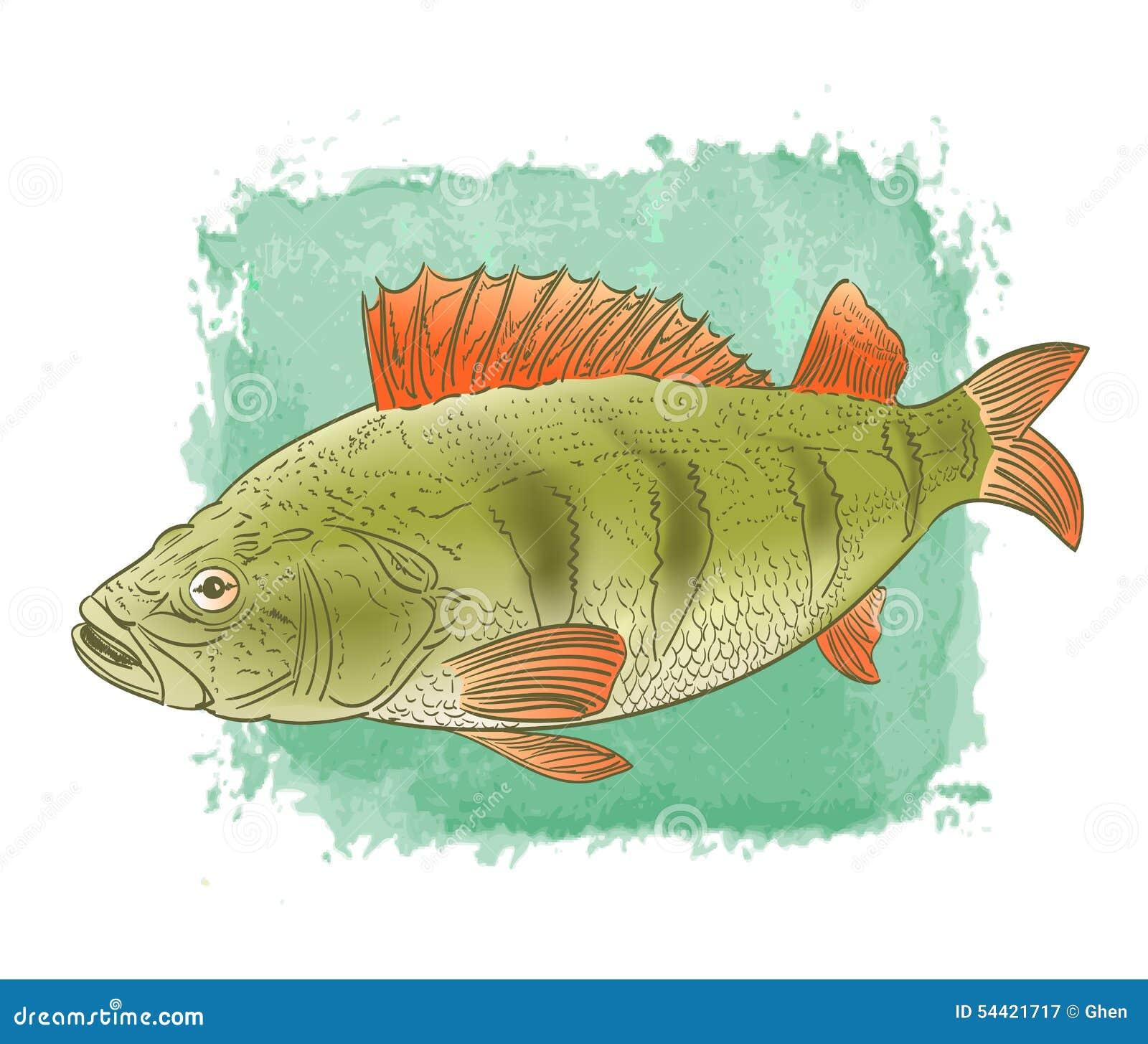Dessin de couleur de poisson d 39 eau douce illustration de - Poisson dessin couleur ...
