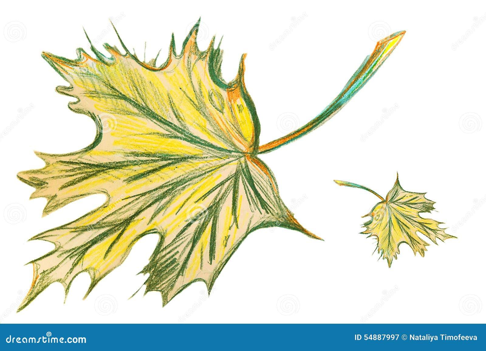 dessin de feuille d rable verte