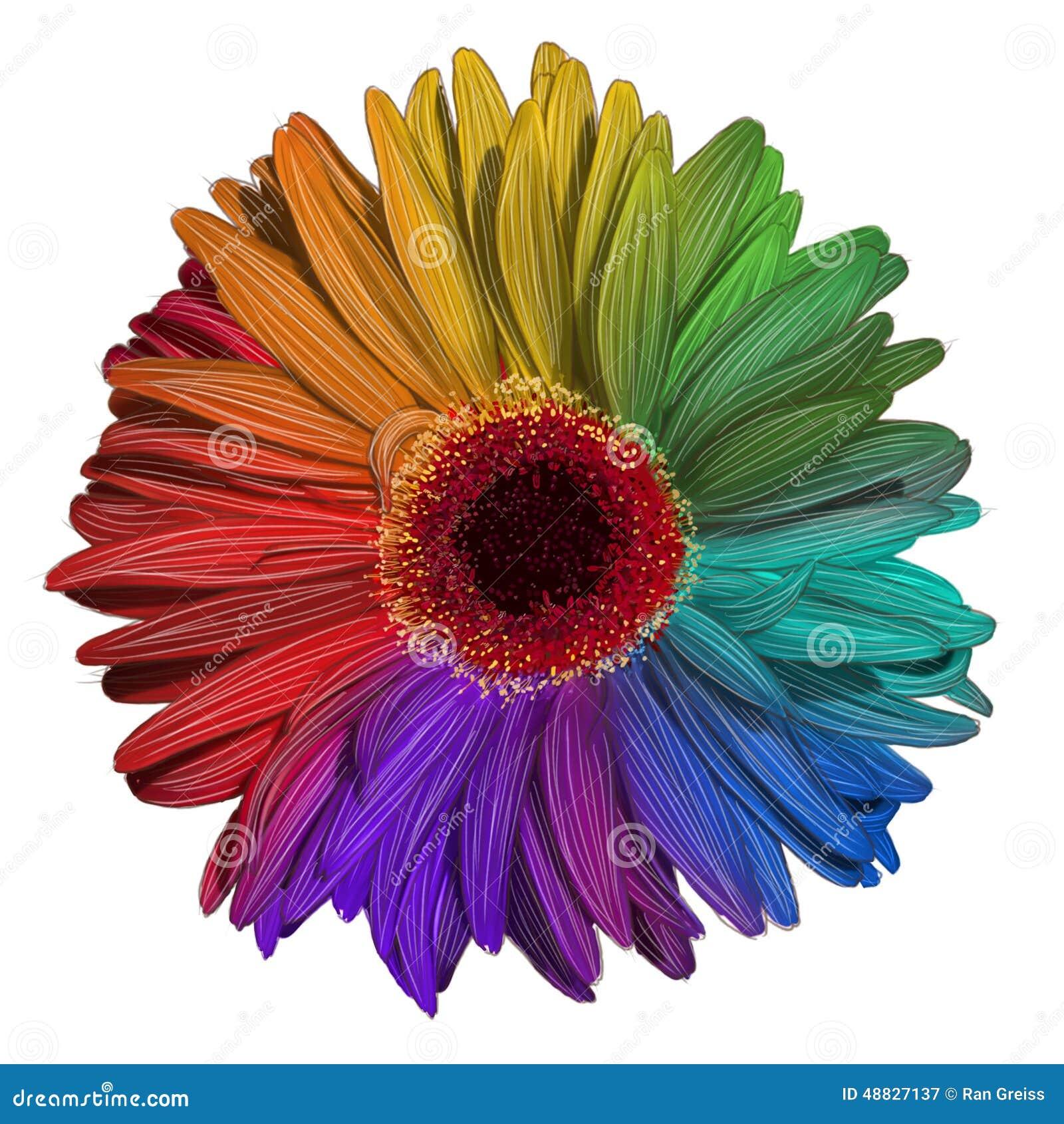 Dessin de fleur color e de gerbera illustration stock - Dessin de fleur en couleur ...