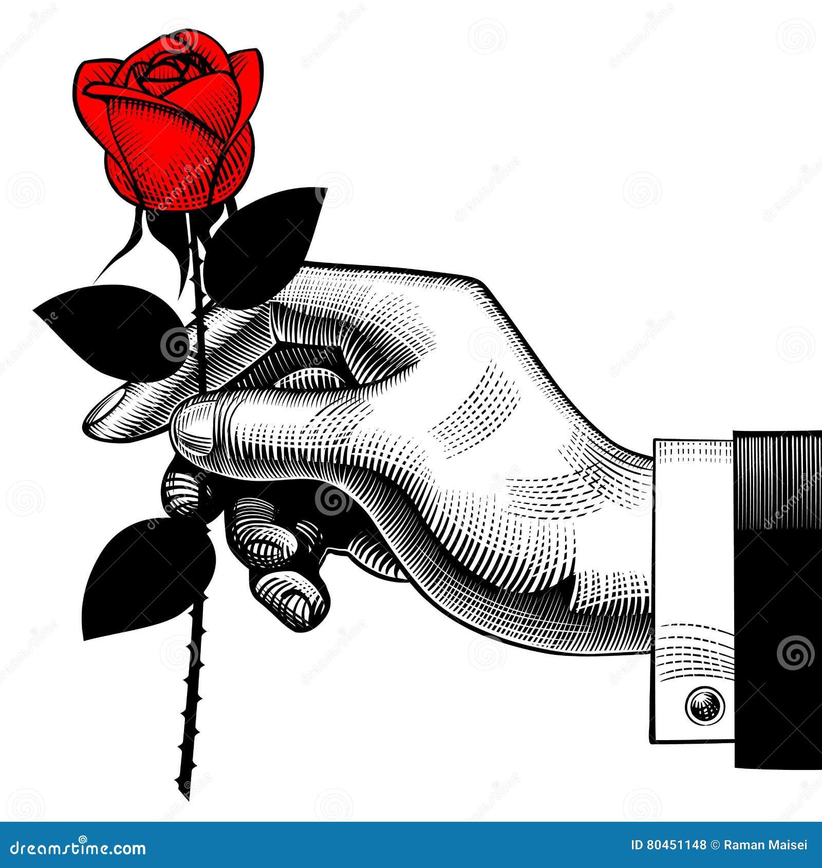 Dessin de gravure de vintage de main avec une rose rouge - Main en dessin ...