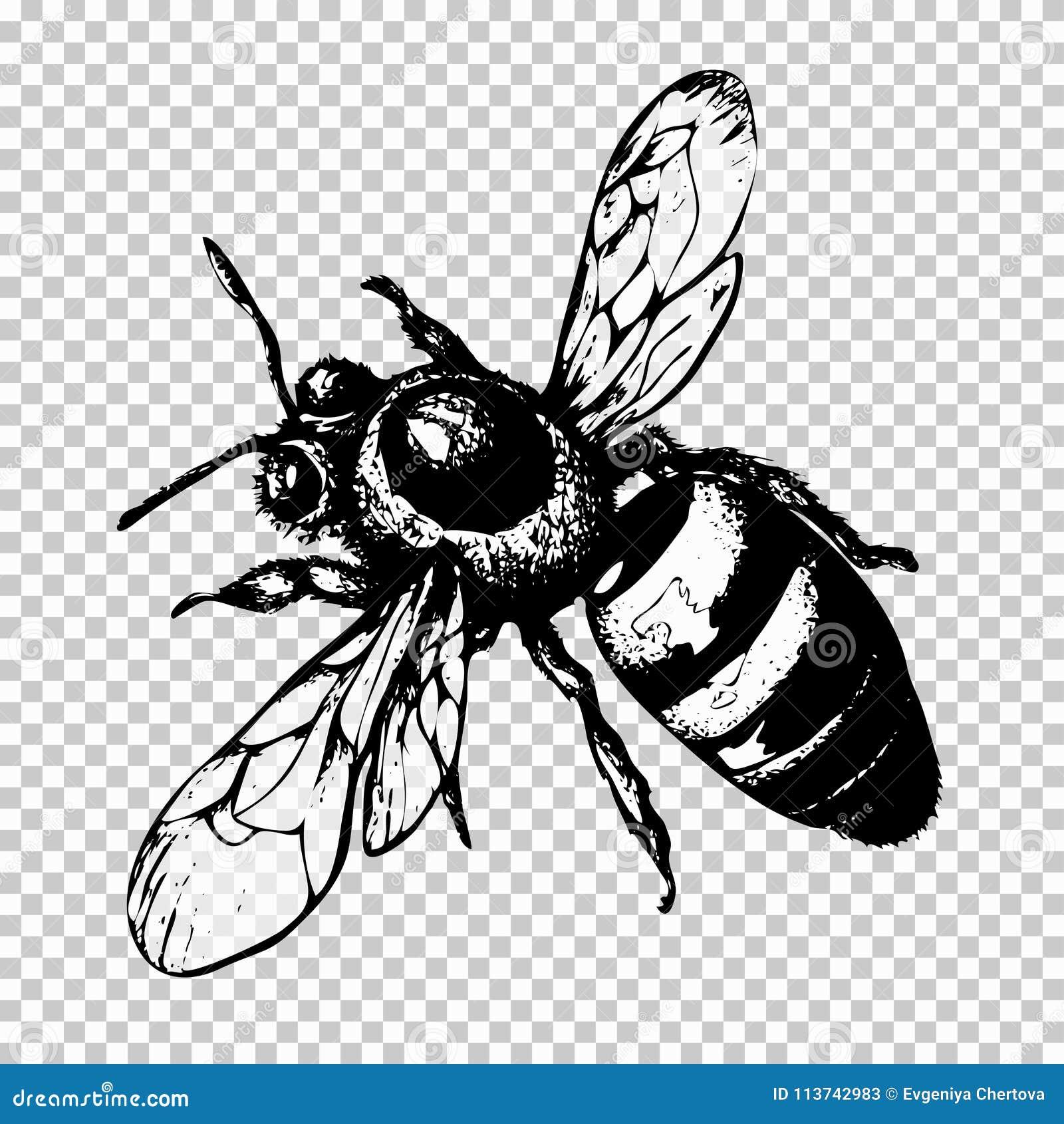 Dessin De Main Dabeille Insecte Noir De Croquis Sur Un