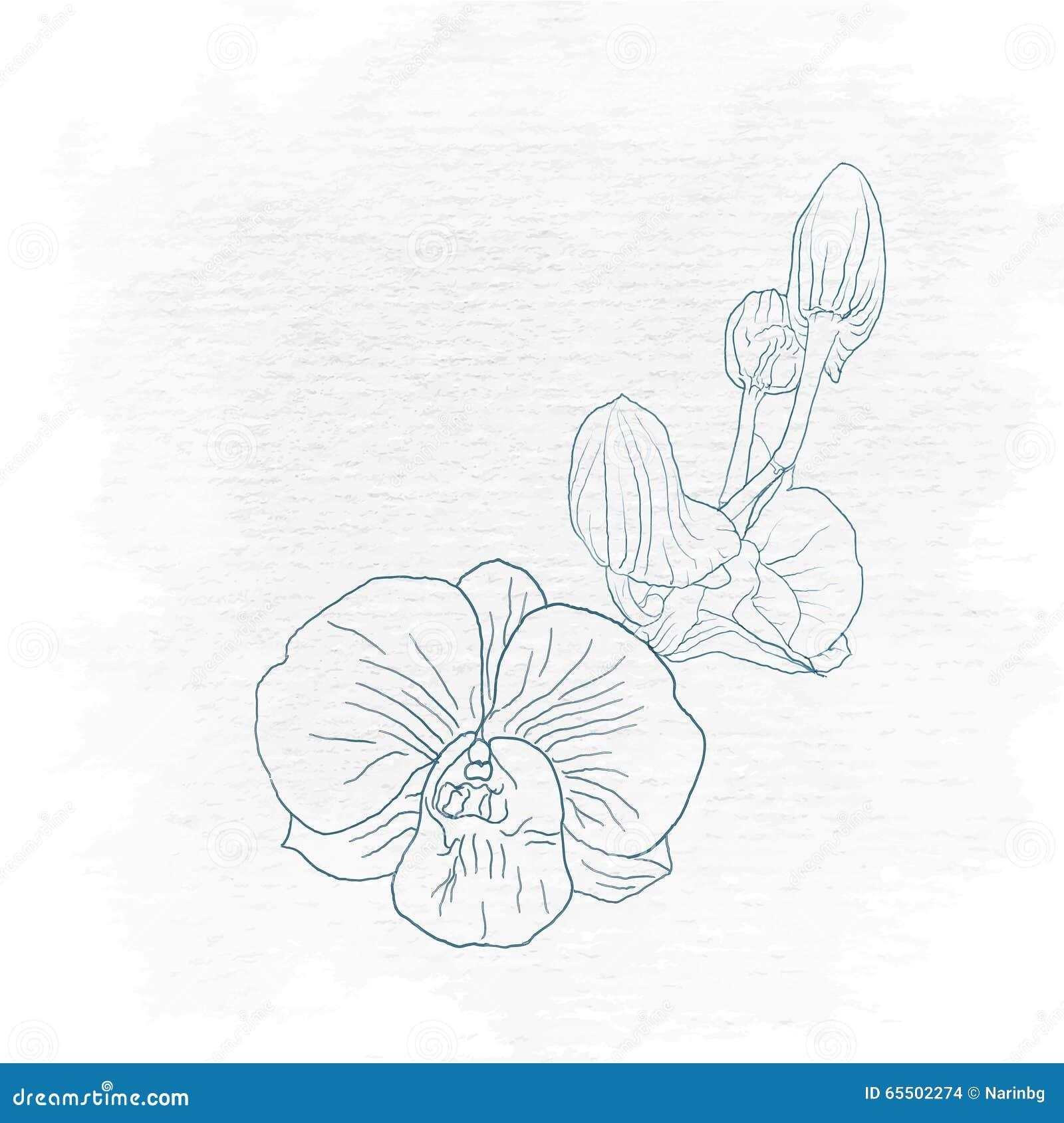 Dessin de main d 39 orchid e sur l 39 art illustration de vecteur image 65502274 - Dessin d orchidee ...